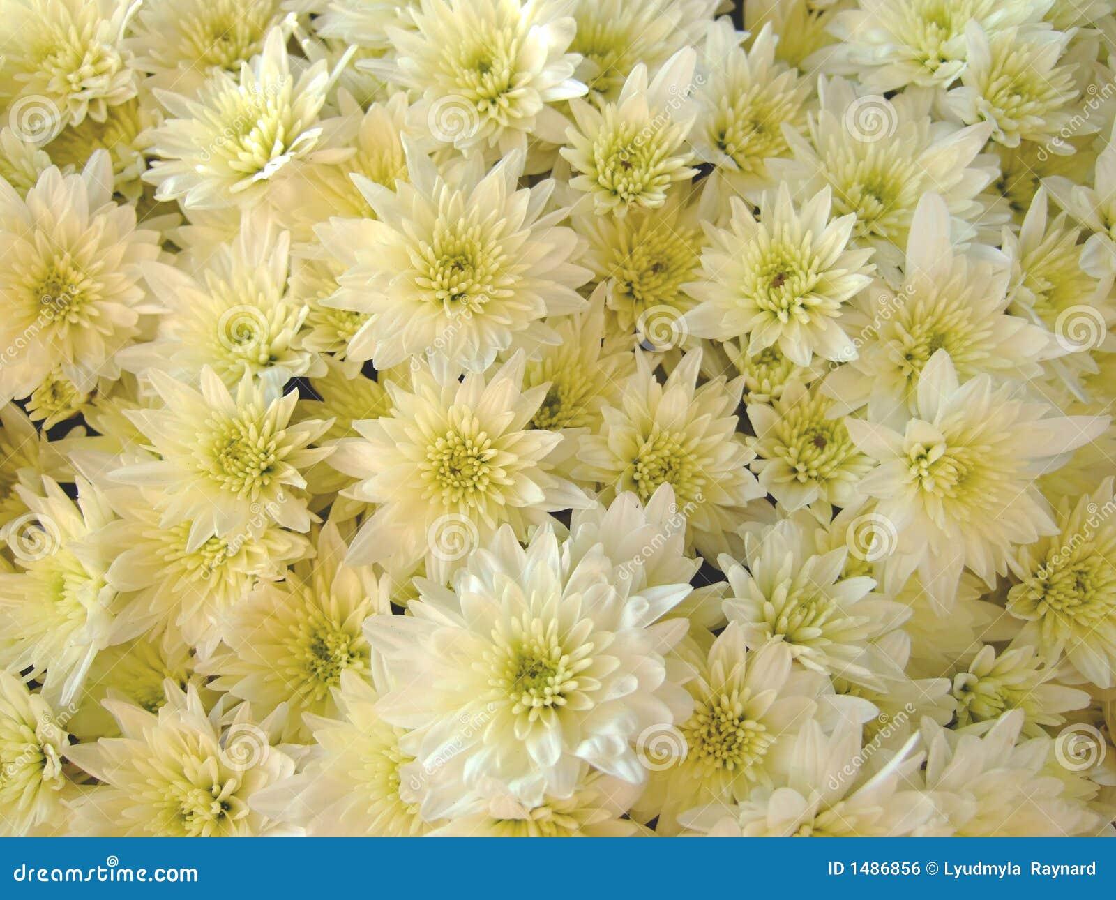 Dekoration mit den Blumen gefunden auf Grab.
