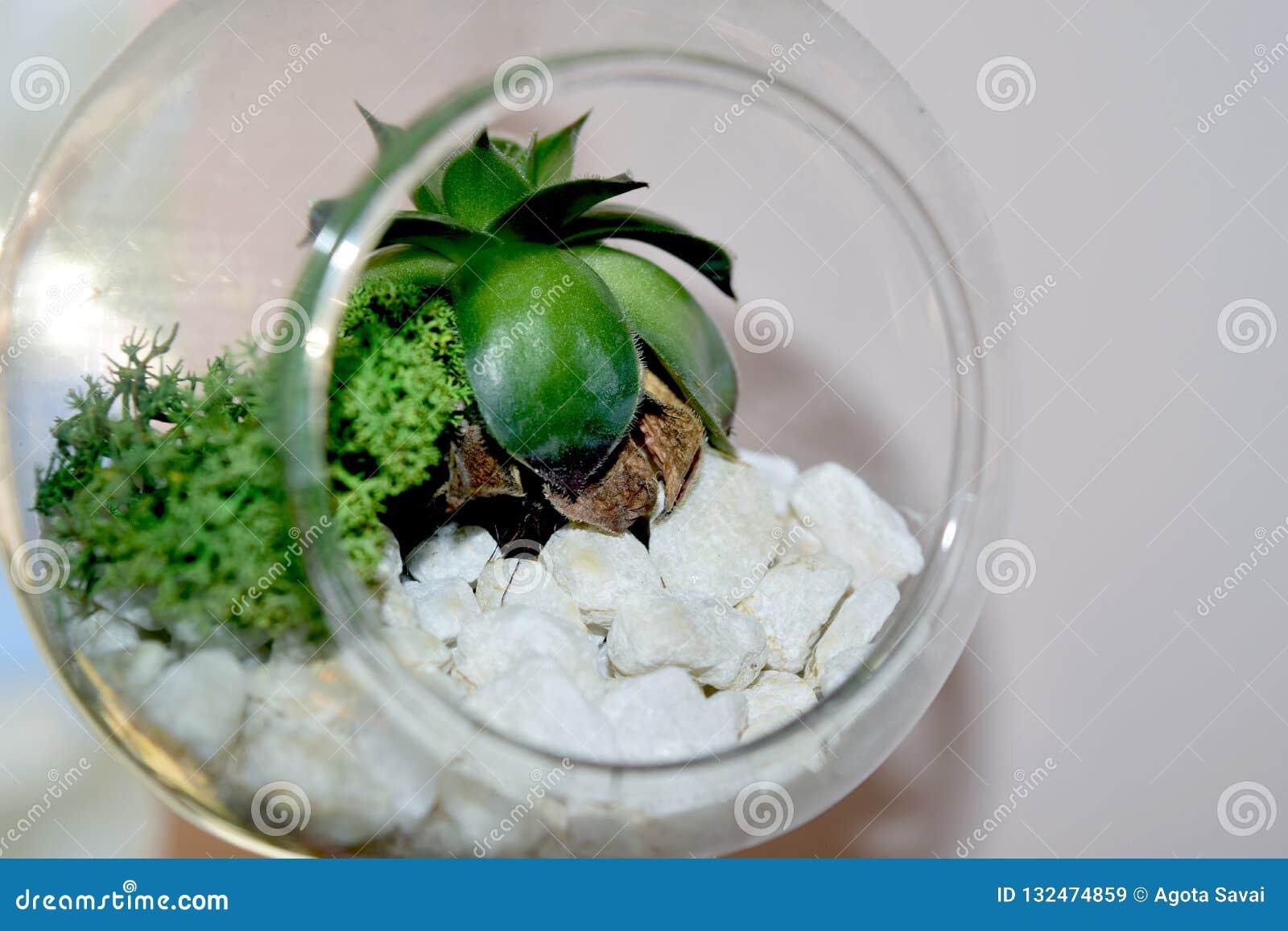 Dekorativ blomma som bevaras i jordklotet av exponeringsglas som isoleras på vit