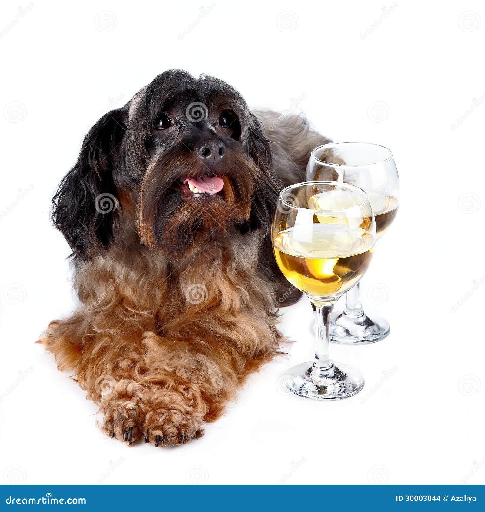 Dekorativ hund med exponeringsglas