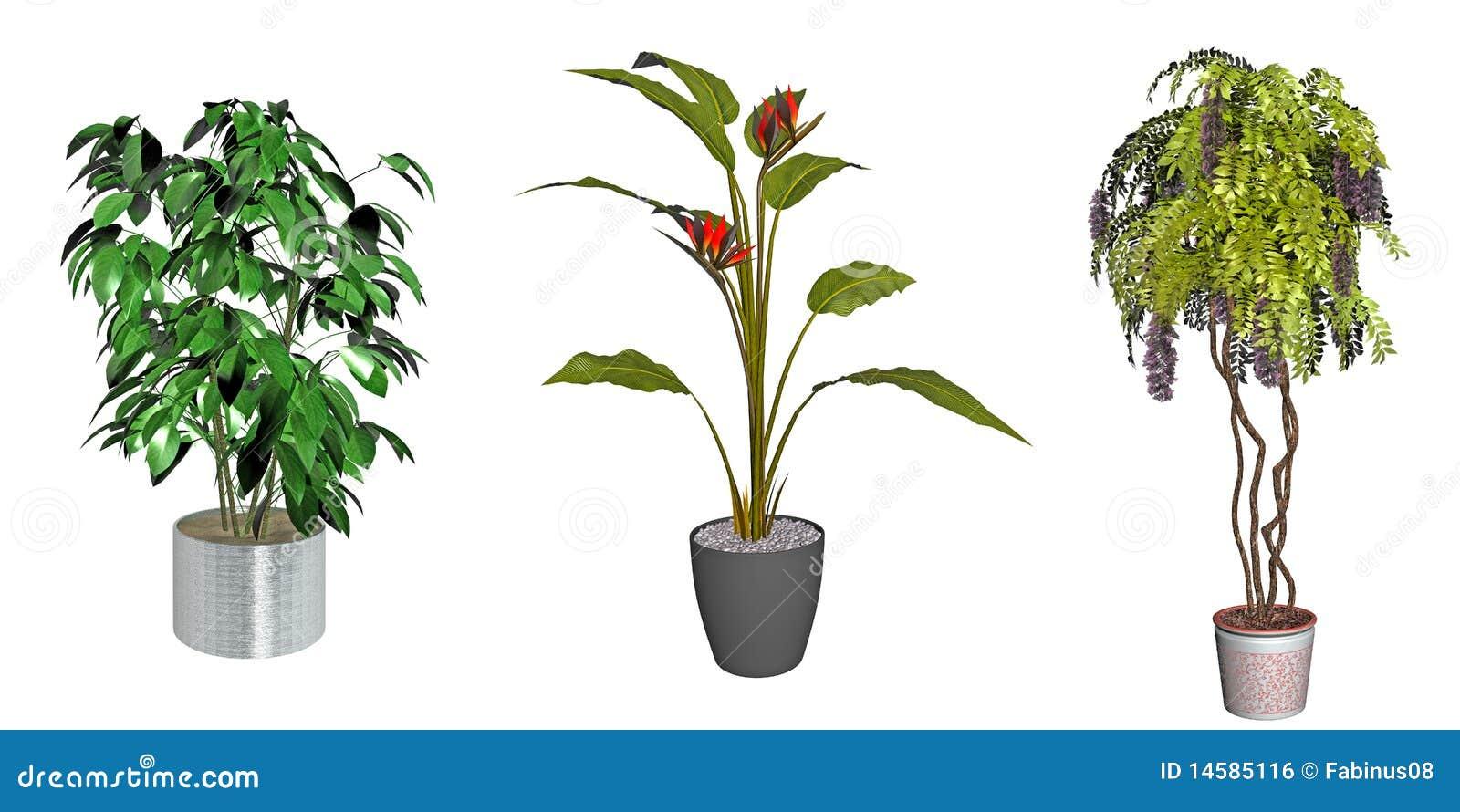 dekorative gr npflanzen