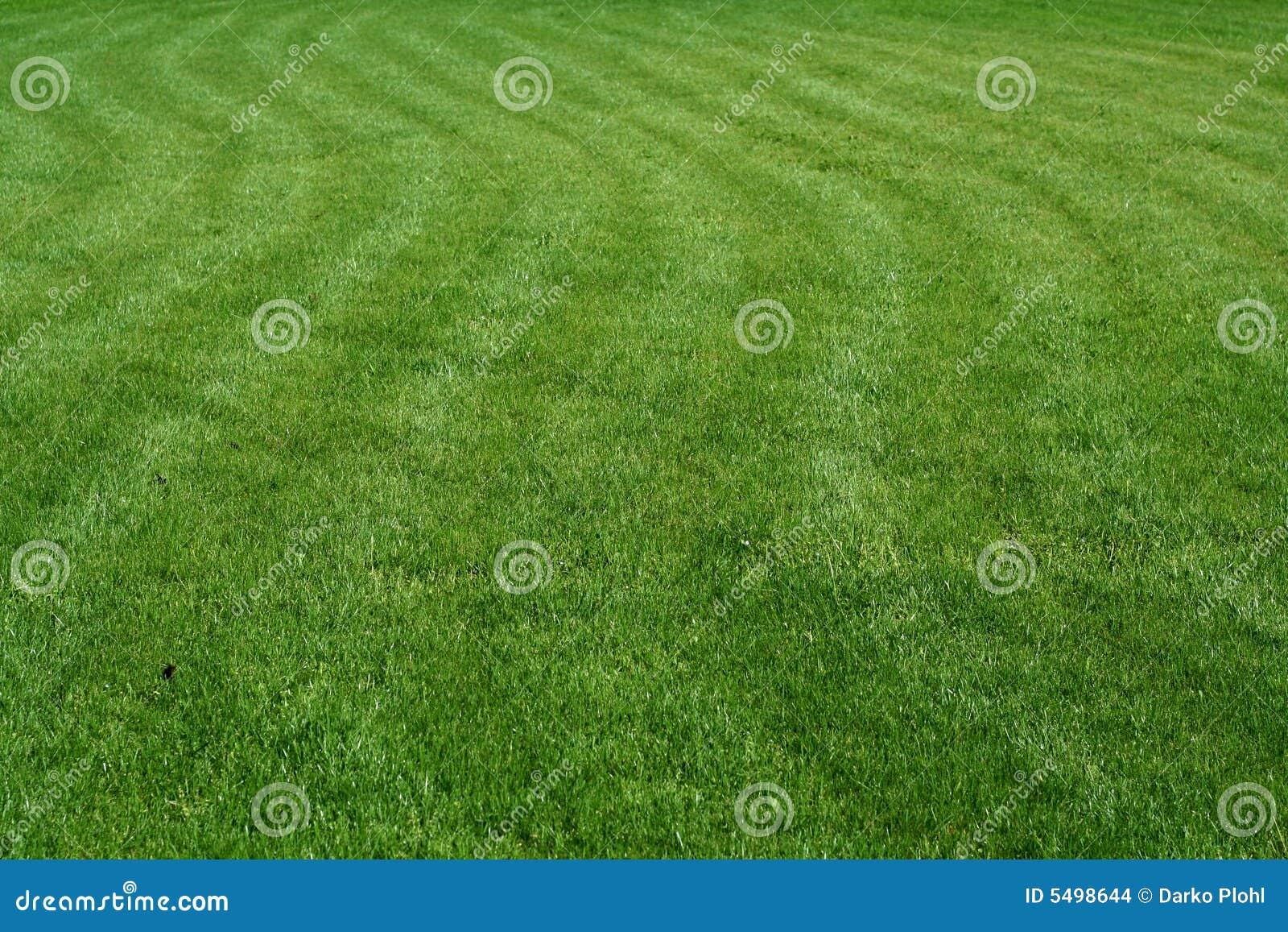 Dekorativt gräsbarn