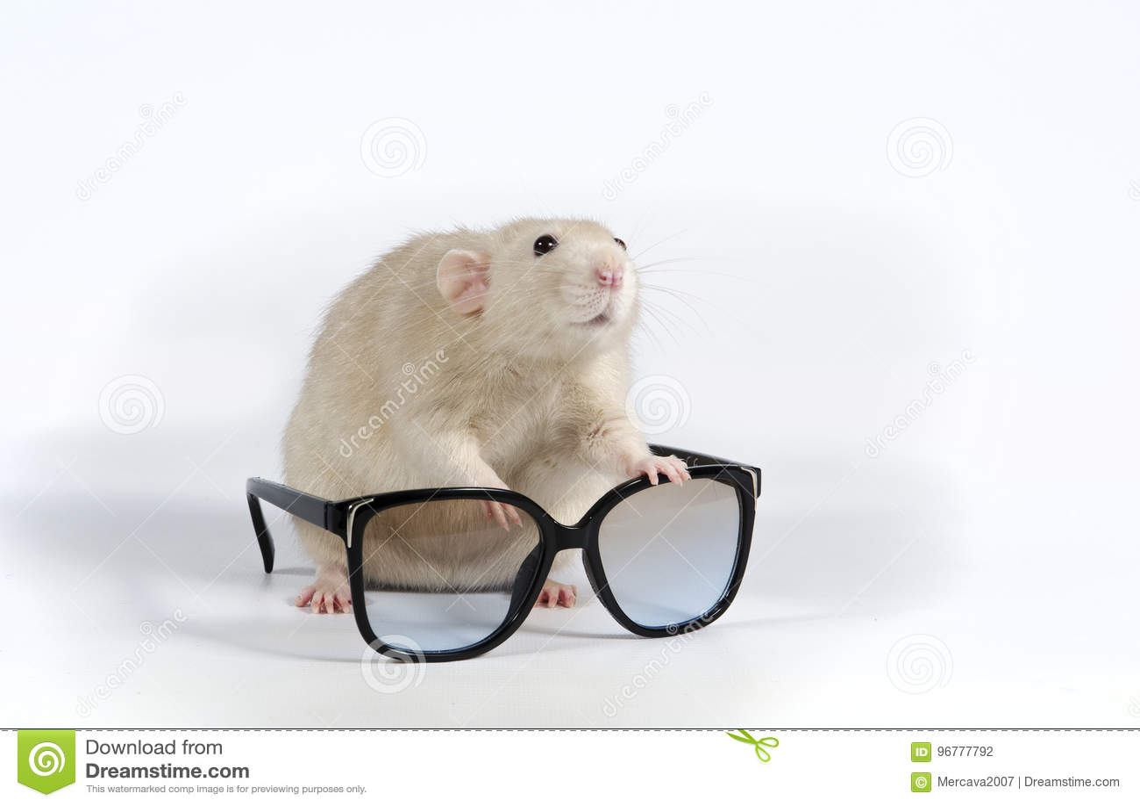 Dekorativt tjalla och solglasögon