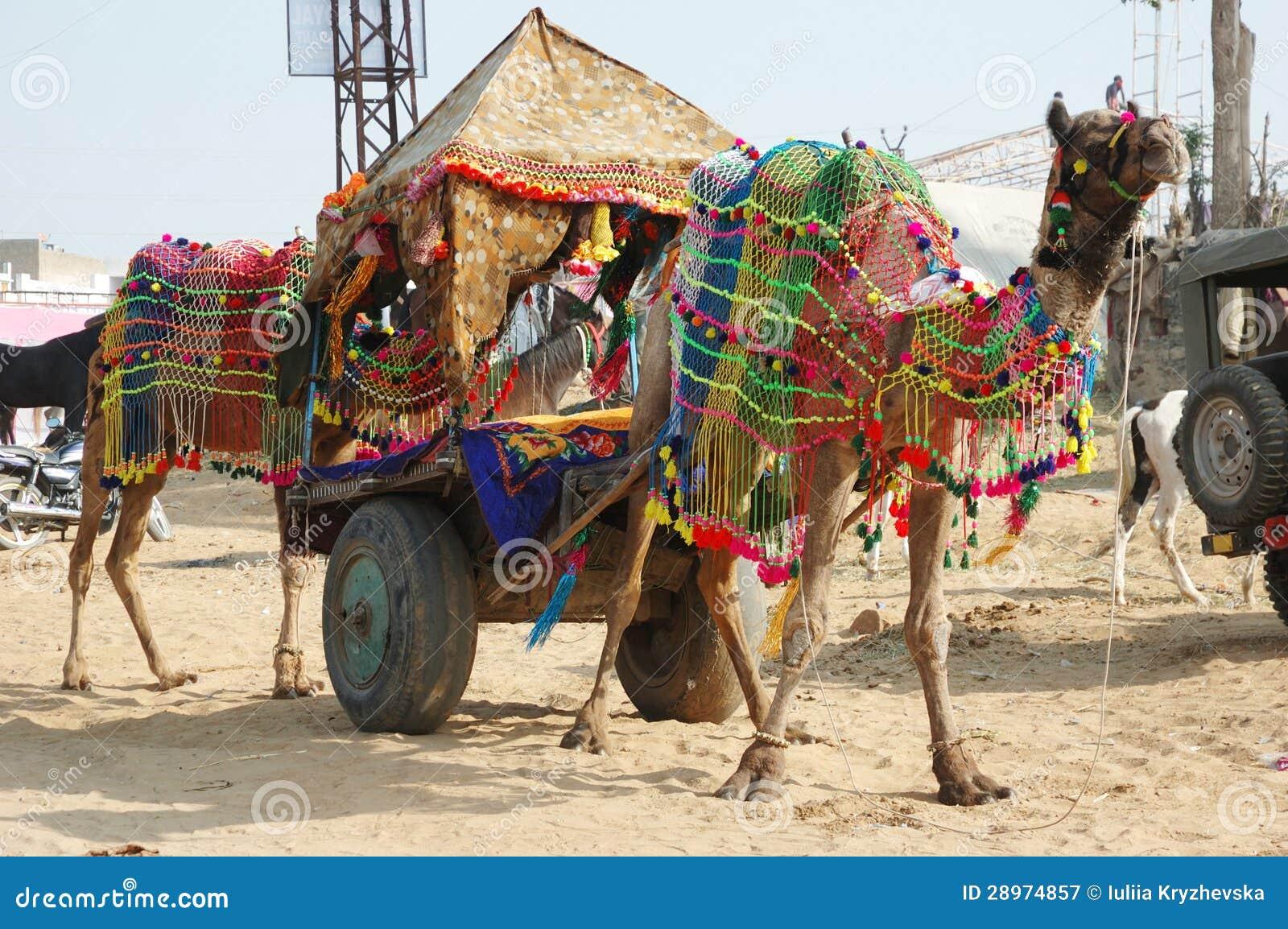 Dekorująca wielbłądzia bierze część przy rocznym pushkar wielbłądzim mela wakacje