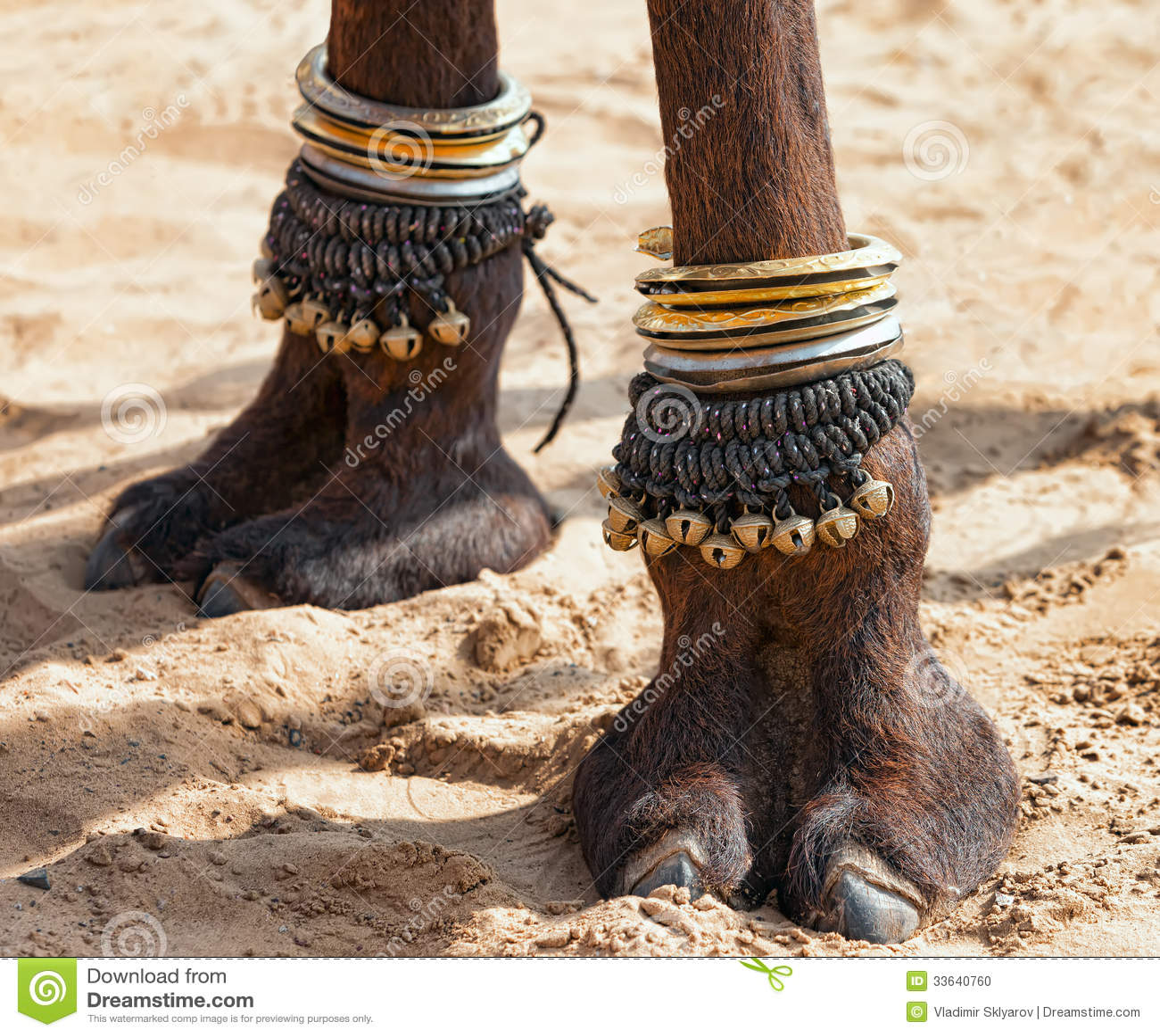 Dekorująca wielbłądzia stopa