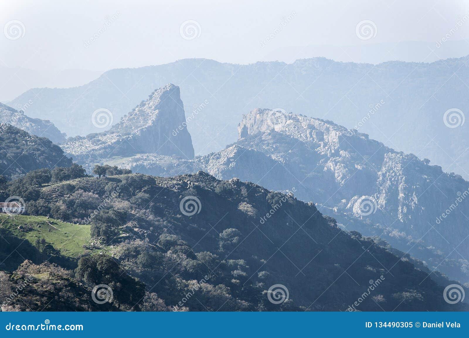 Del cabrero, sierra de Cadice, Andalusia di Salto