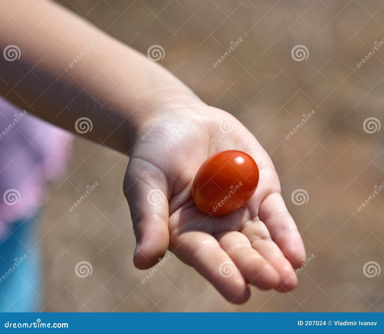 Dela tomaten