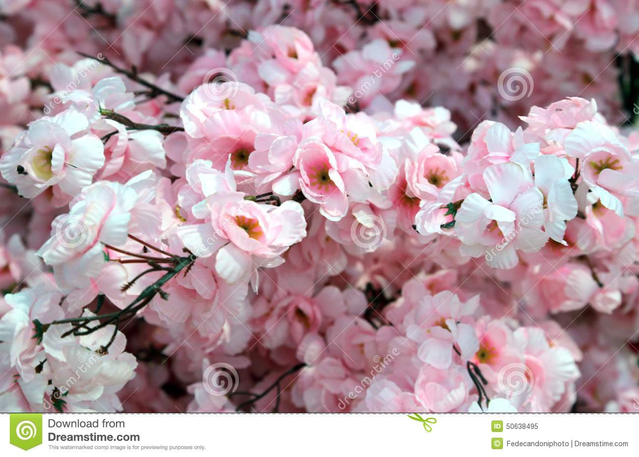 Delcate Flowers Of Pink Color Of A Peach Tree In Spring Stock Image