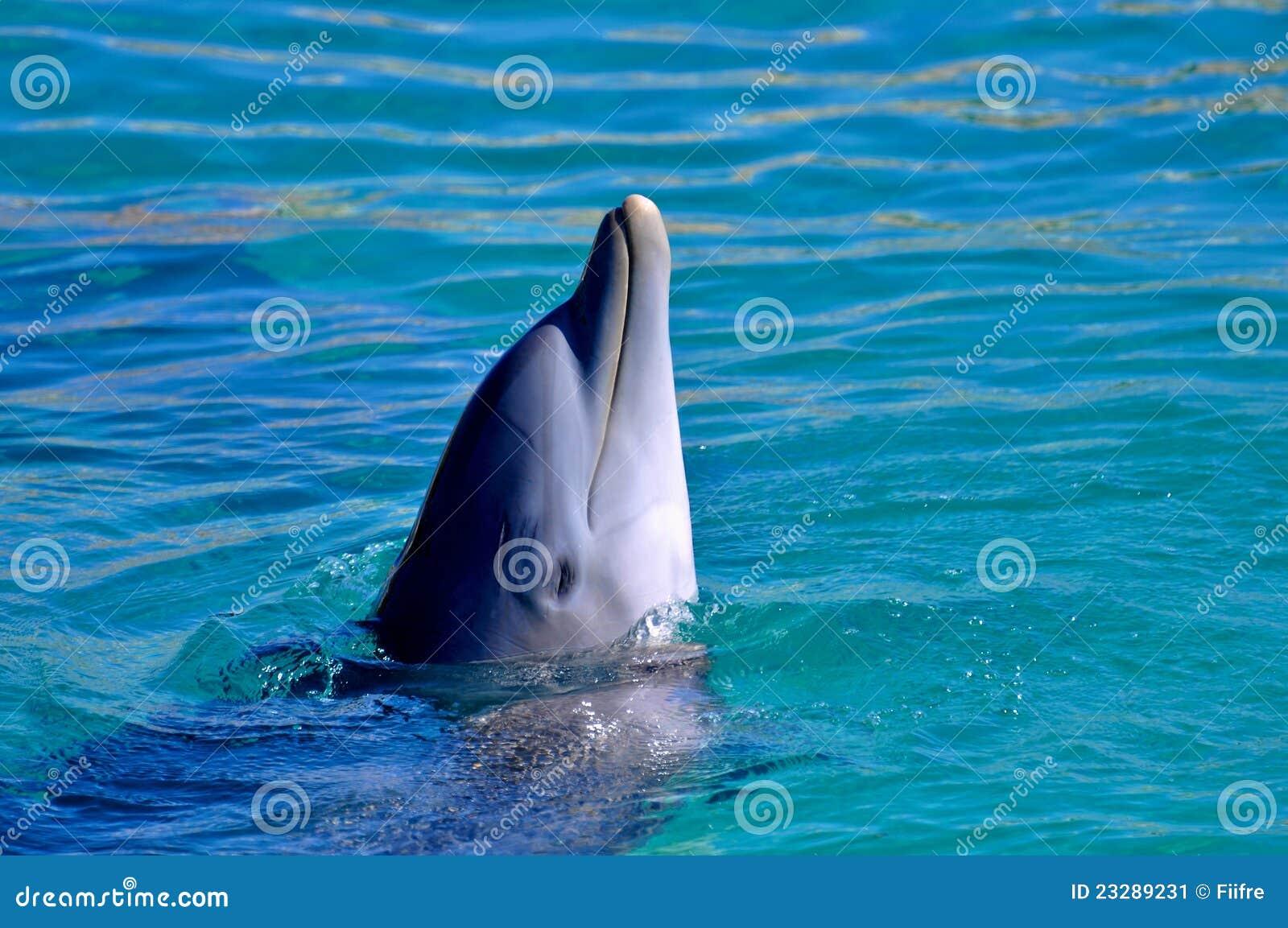 Delfín en agua