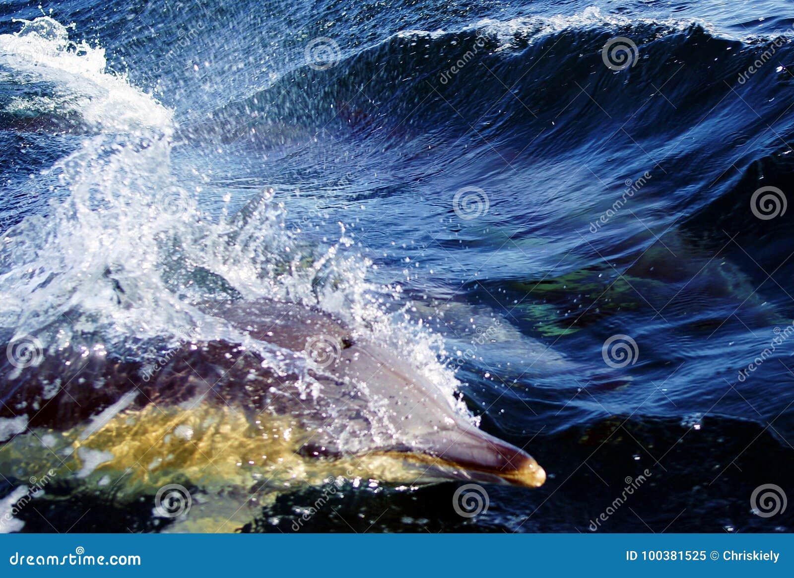 Delfín en agua azul
