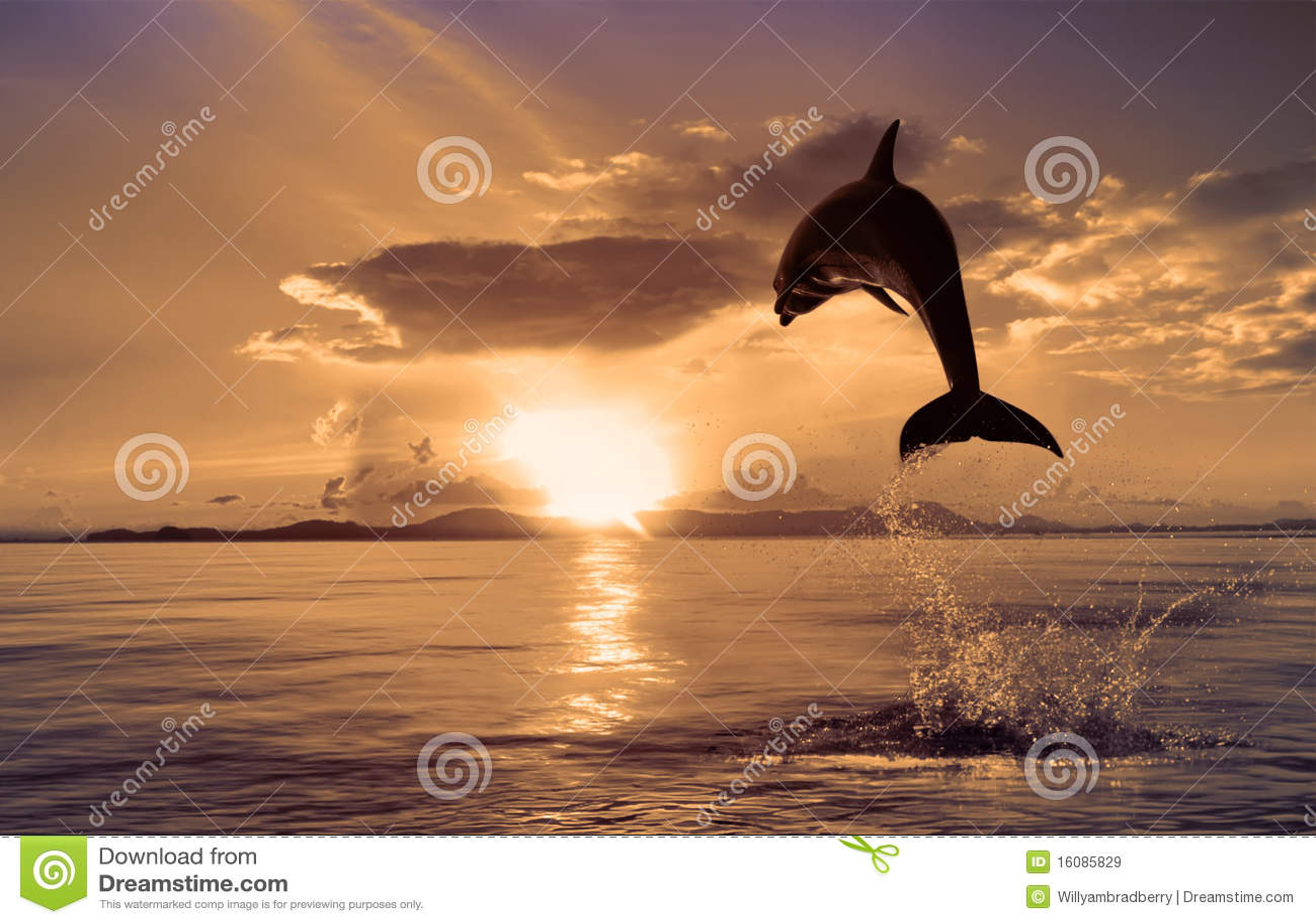 Delfín hermoso que salta del agua brillante