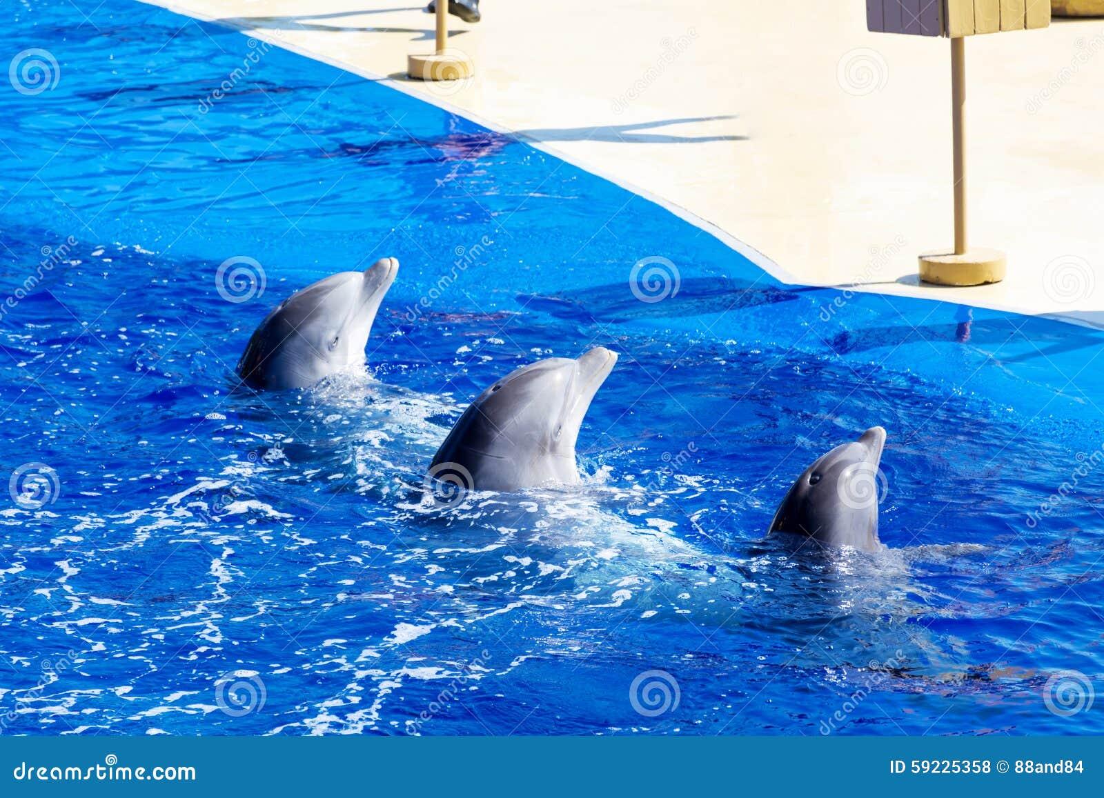 Delfínes entrenados en piscina del parque del agua
