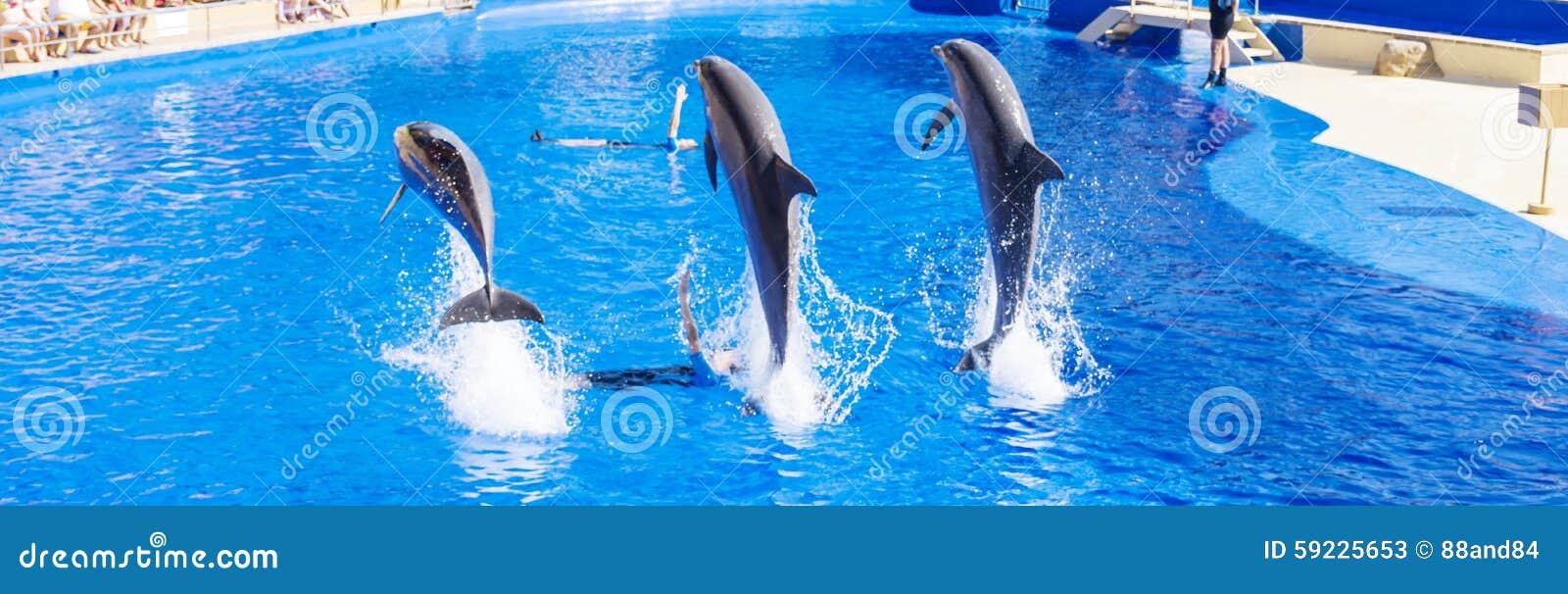 Delfínes entrenados que saltan en piscina del parque del agua