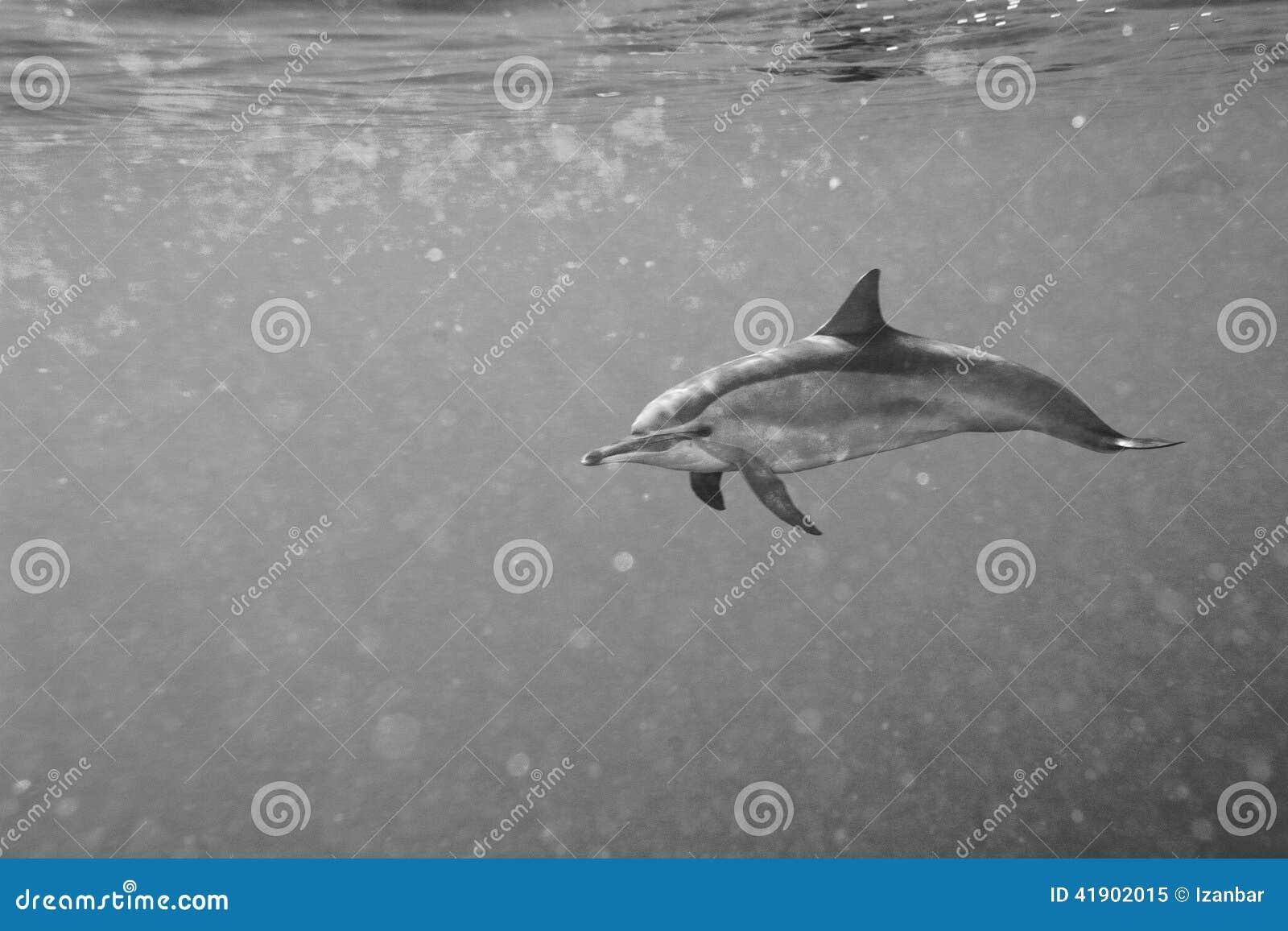 Delfínes mientras que nada bajo el agua