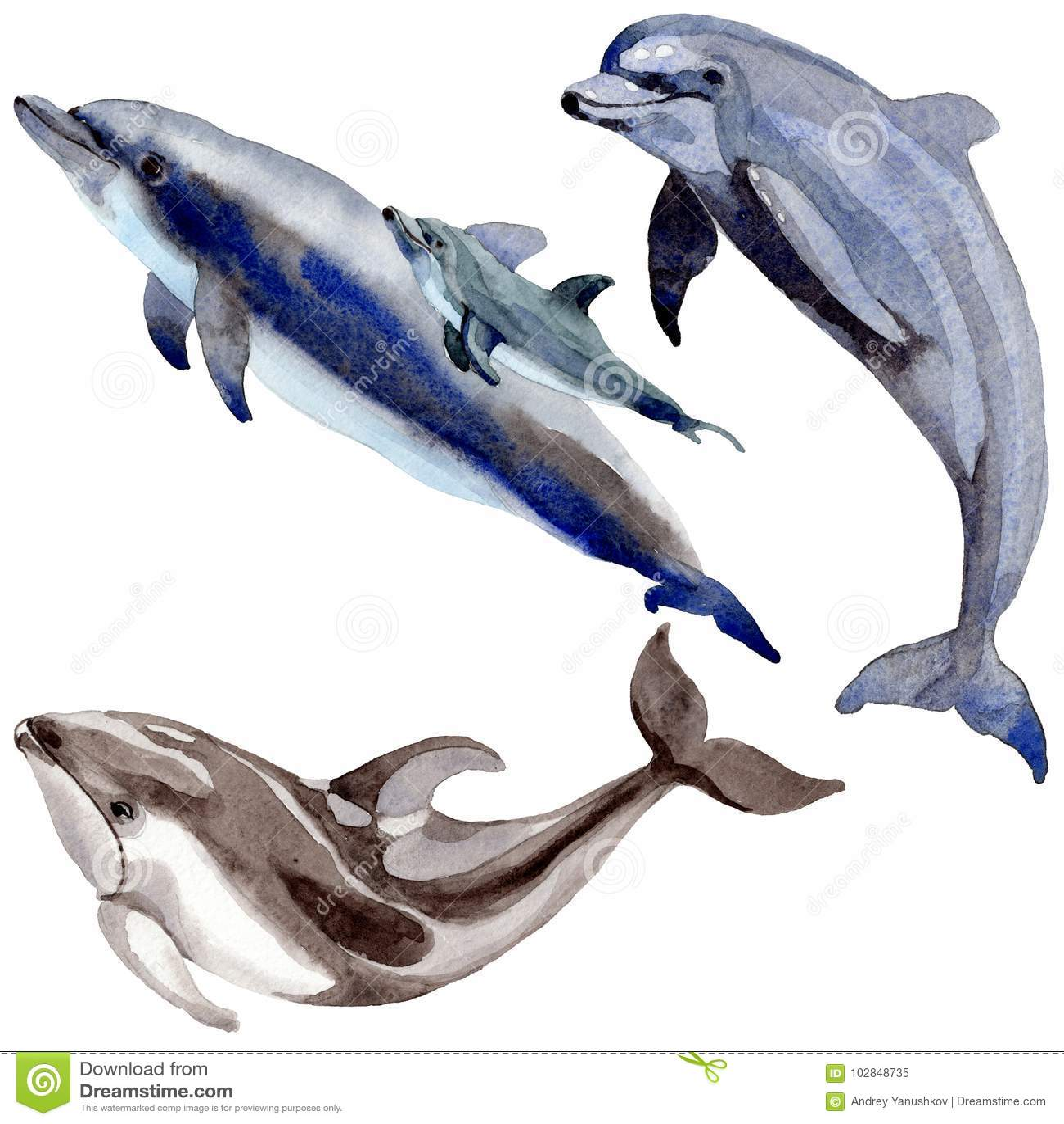 Delfinów dzicy ssaki w akwarela stylu odizolowywającym