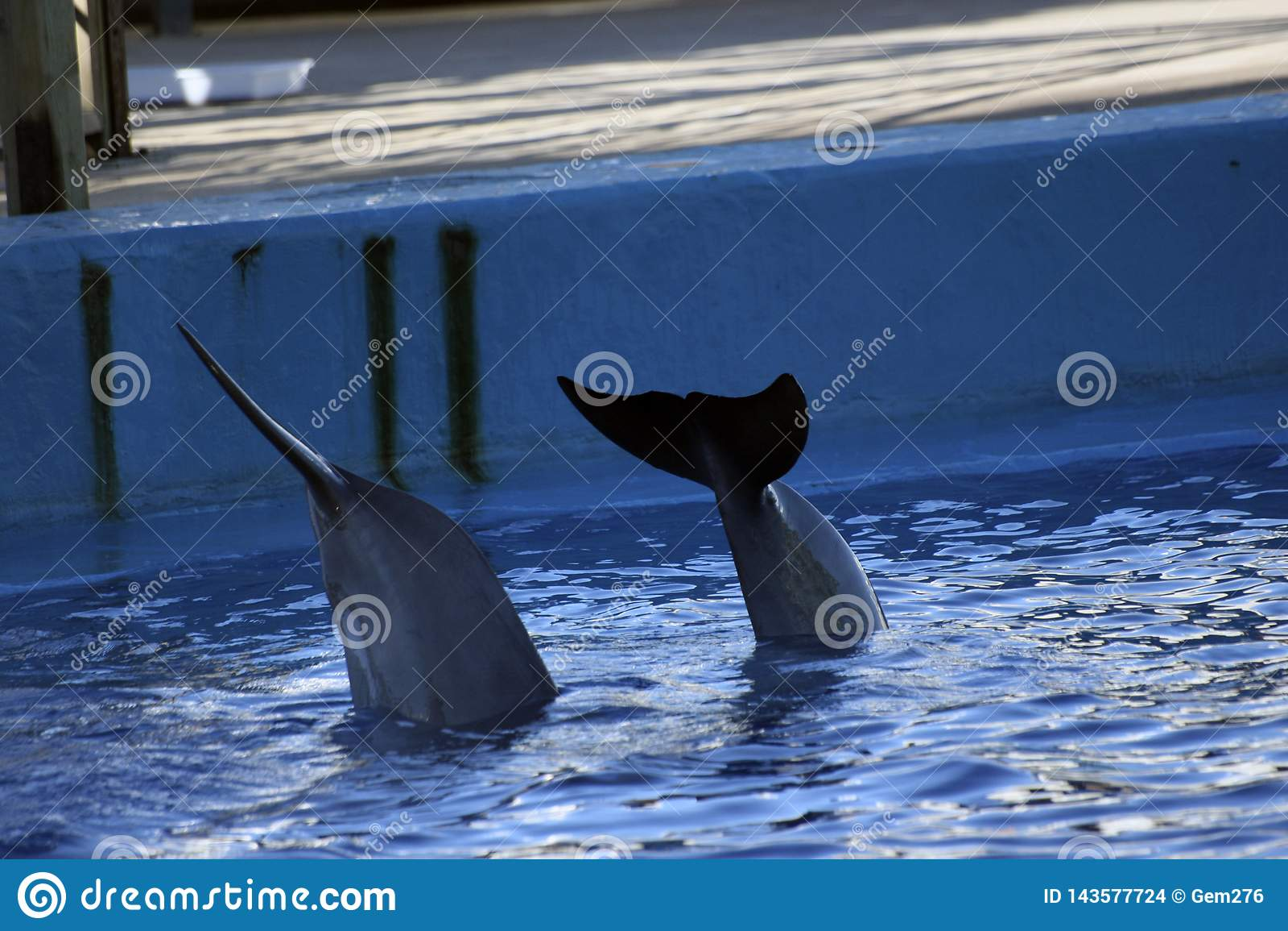 Delfinów ogony w akwarium