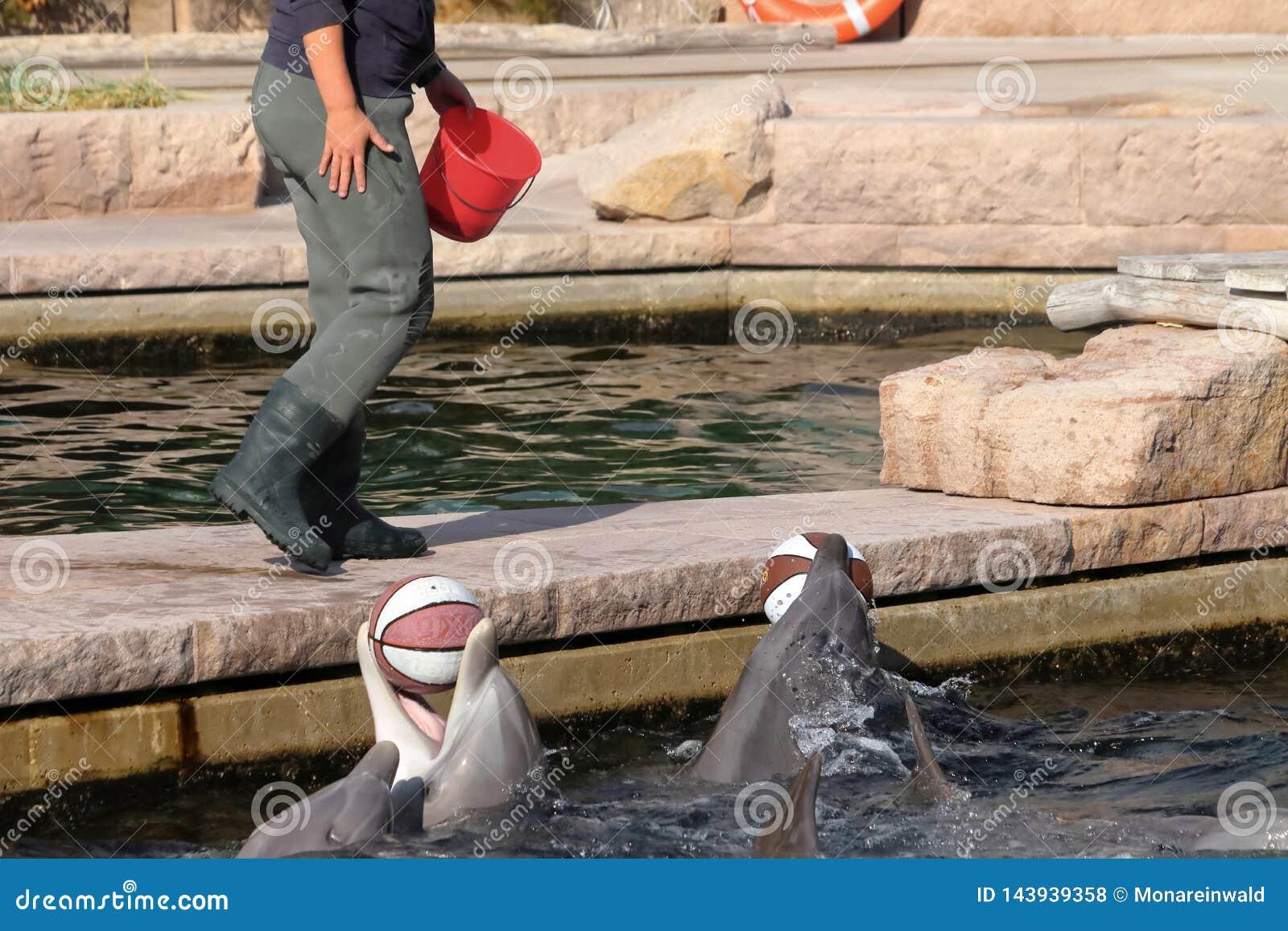 Delfin στο ζωολογικό κήπο στη Γερμανία στη Νυρεμβέργη