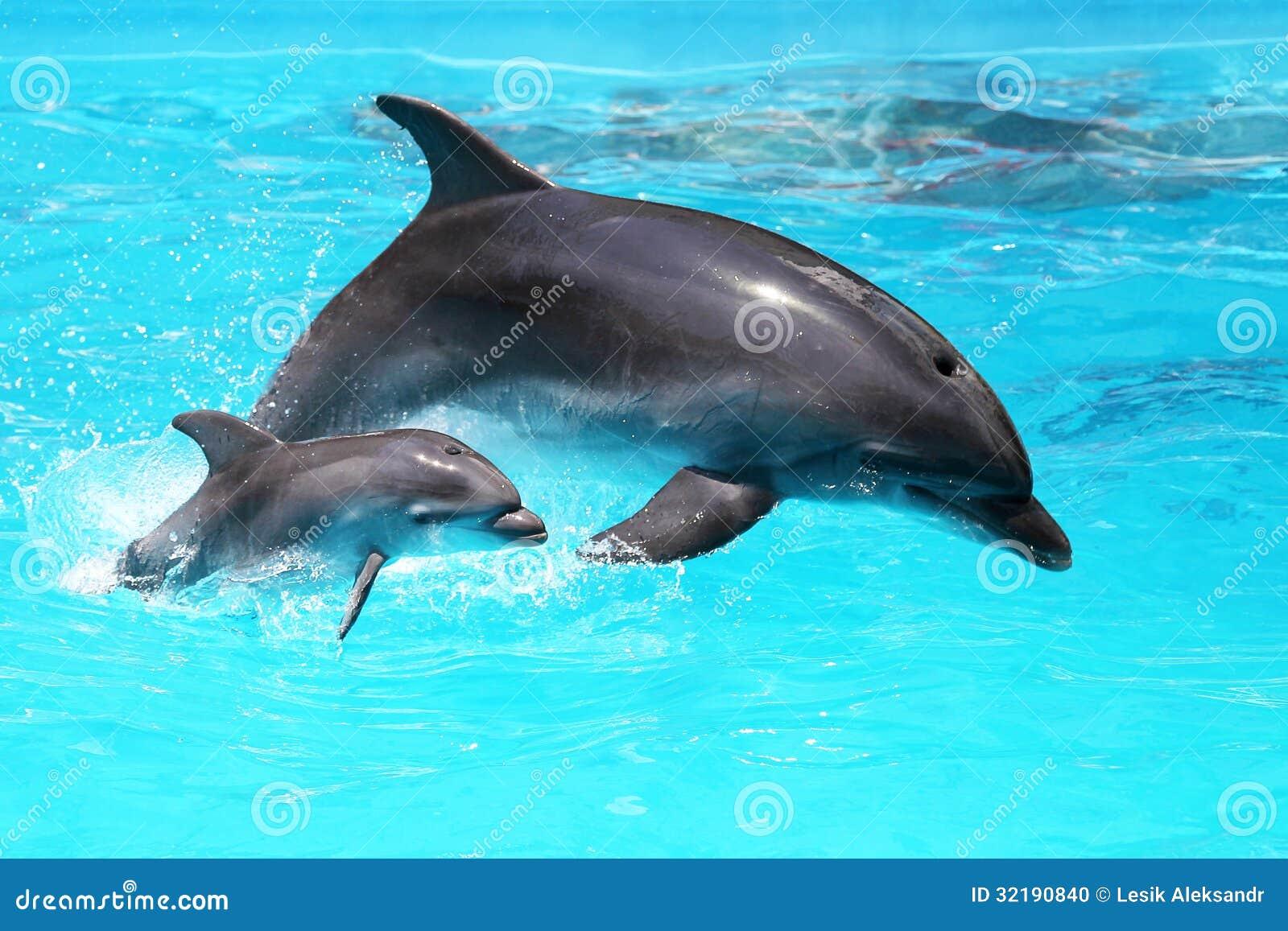 Delfin z dzieckiem unosi się w wodzie