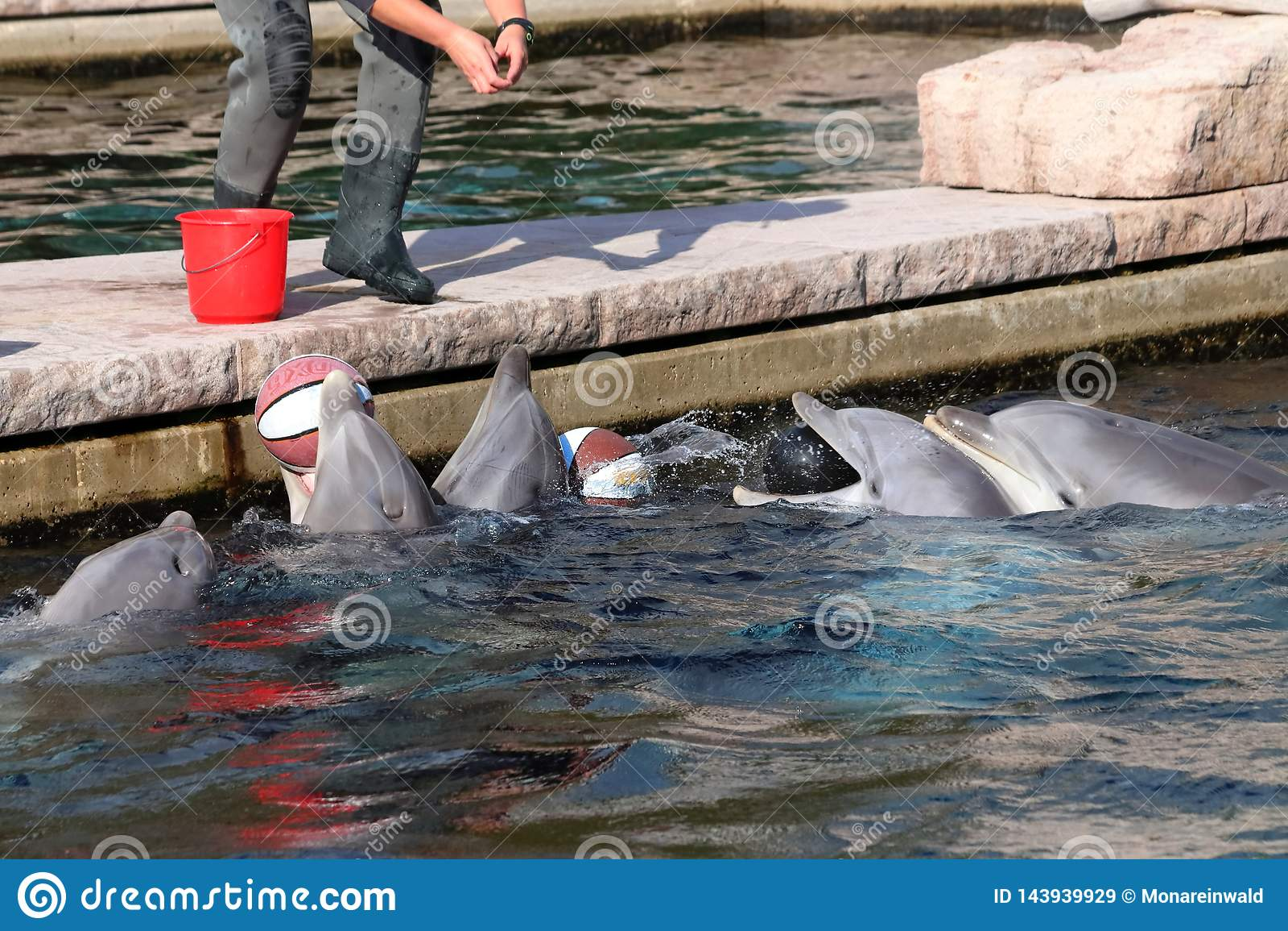 Delfin in zoo in Germania a Norimberga