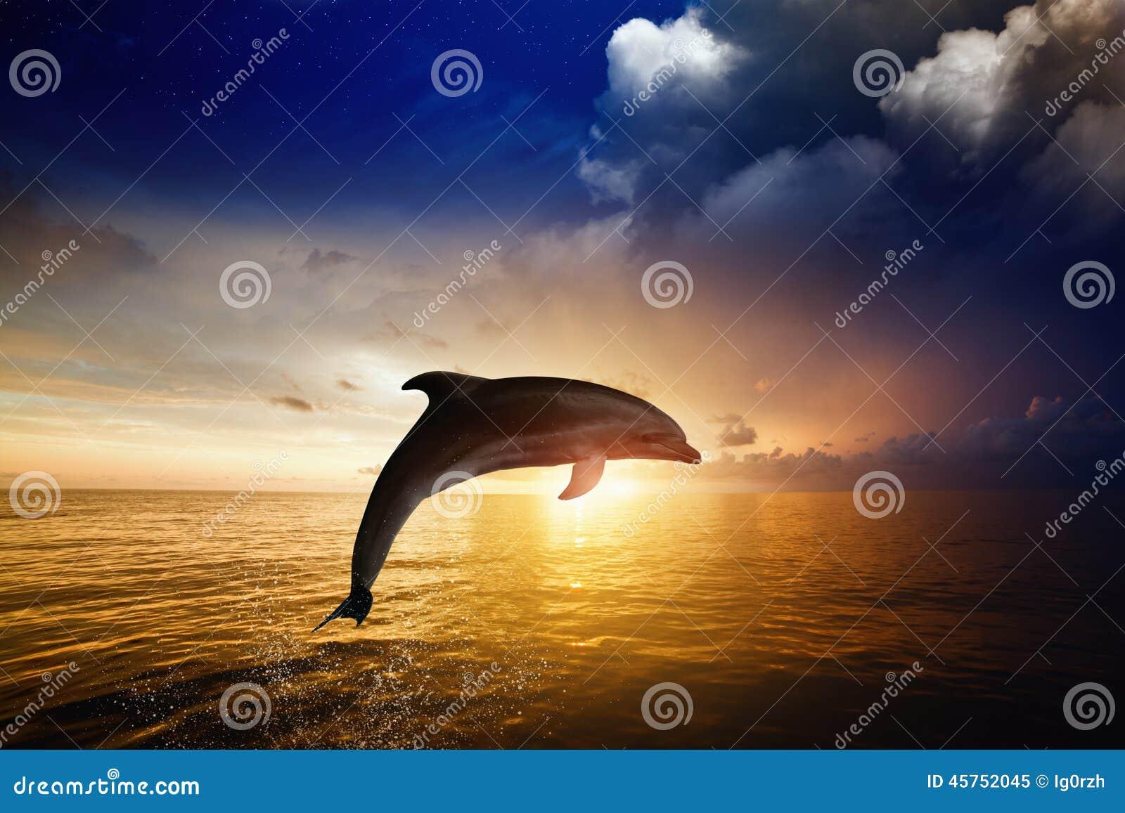 Delfinbanhoppning