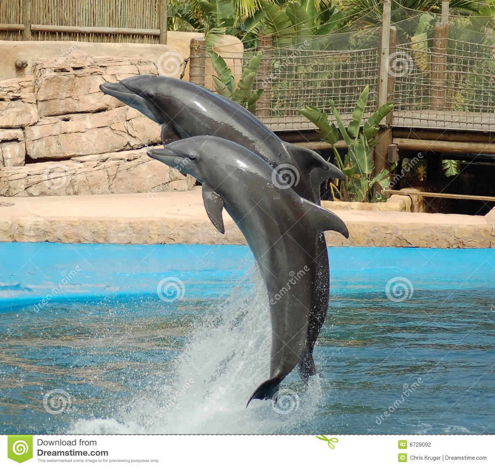 Delfiner som hoppar två