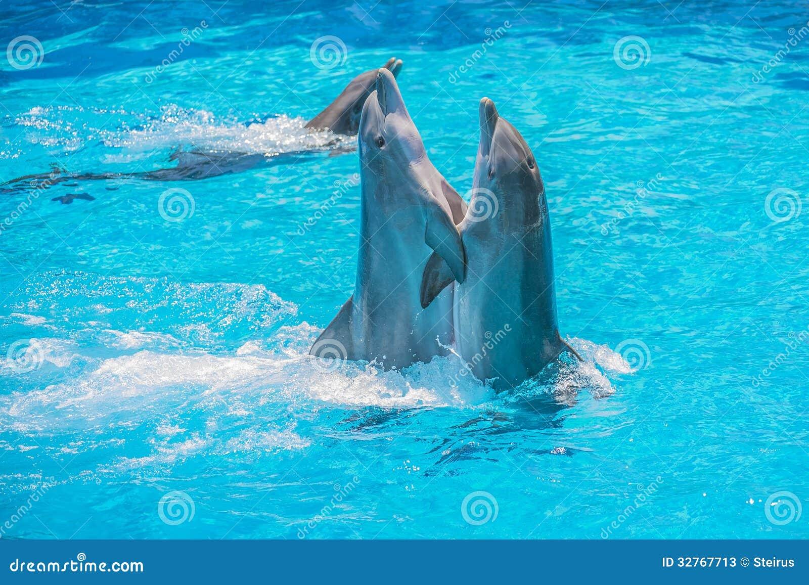 Gioco del delfino