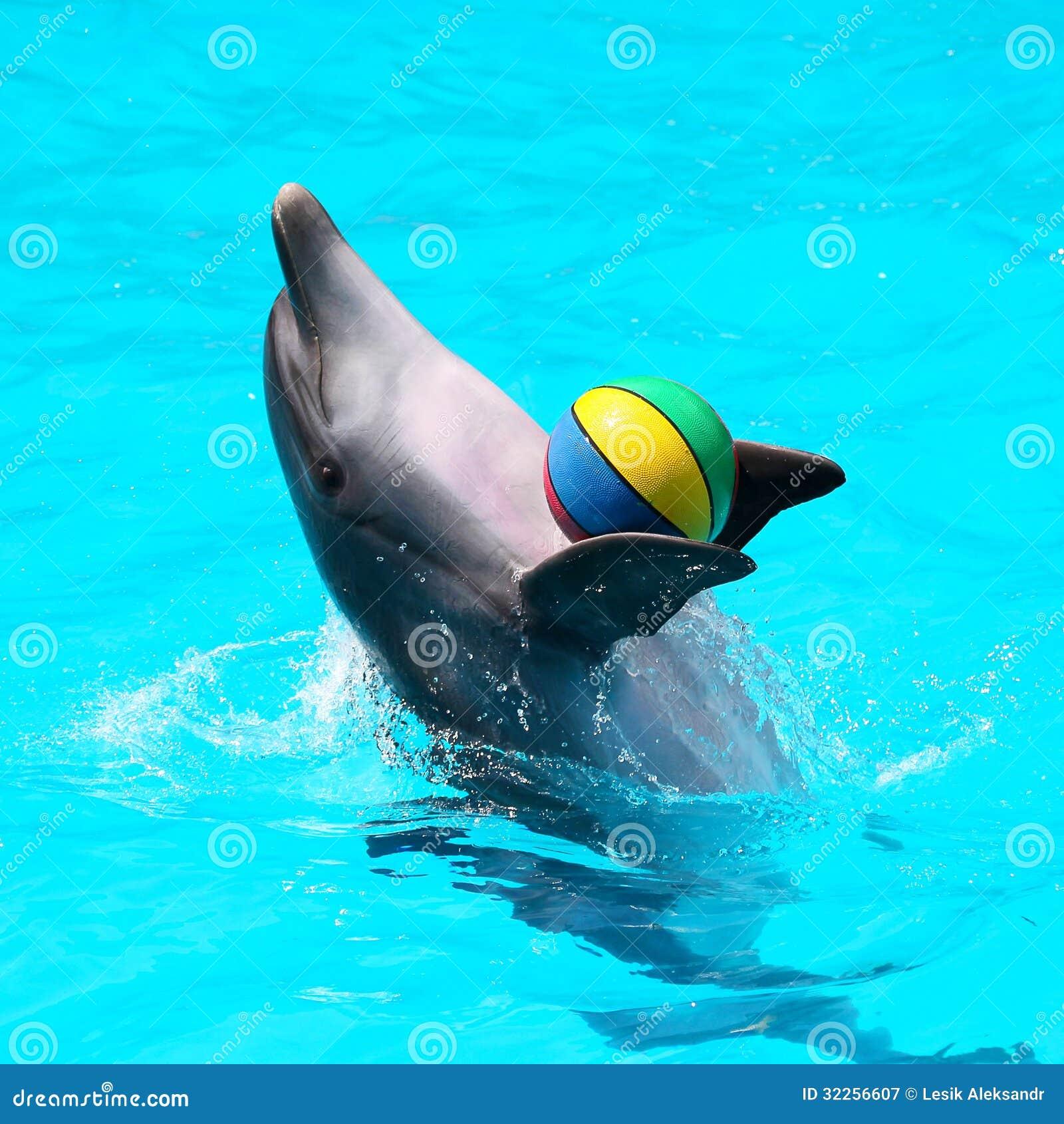 Delfini che giocano nell 39 acqua blu con le palle immagine for Antifurto con le palle