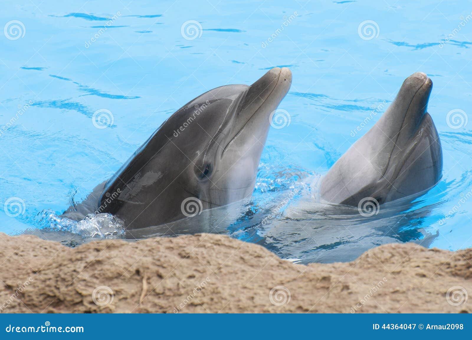 Delfini che nuotano