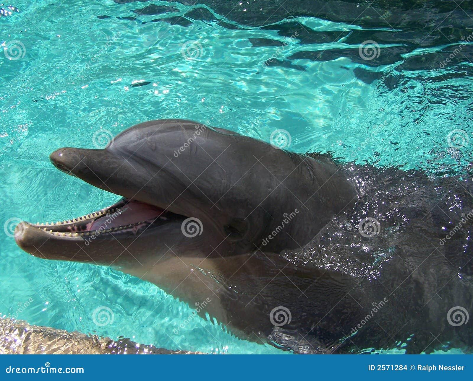 Delfinmöte