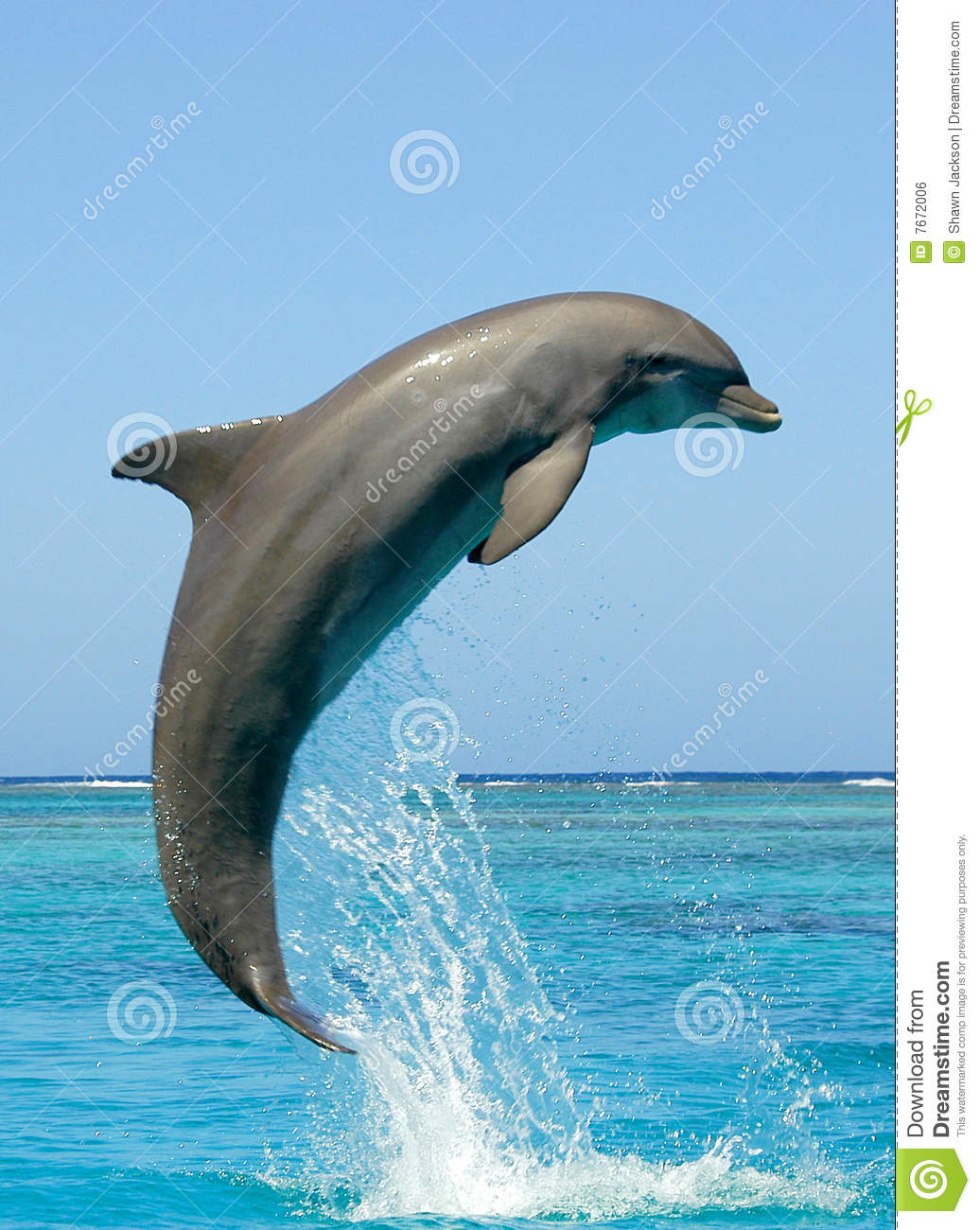jumping bottlenose dolphins dolphin sticker for car boat