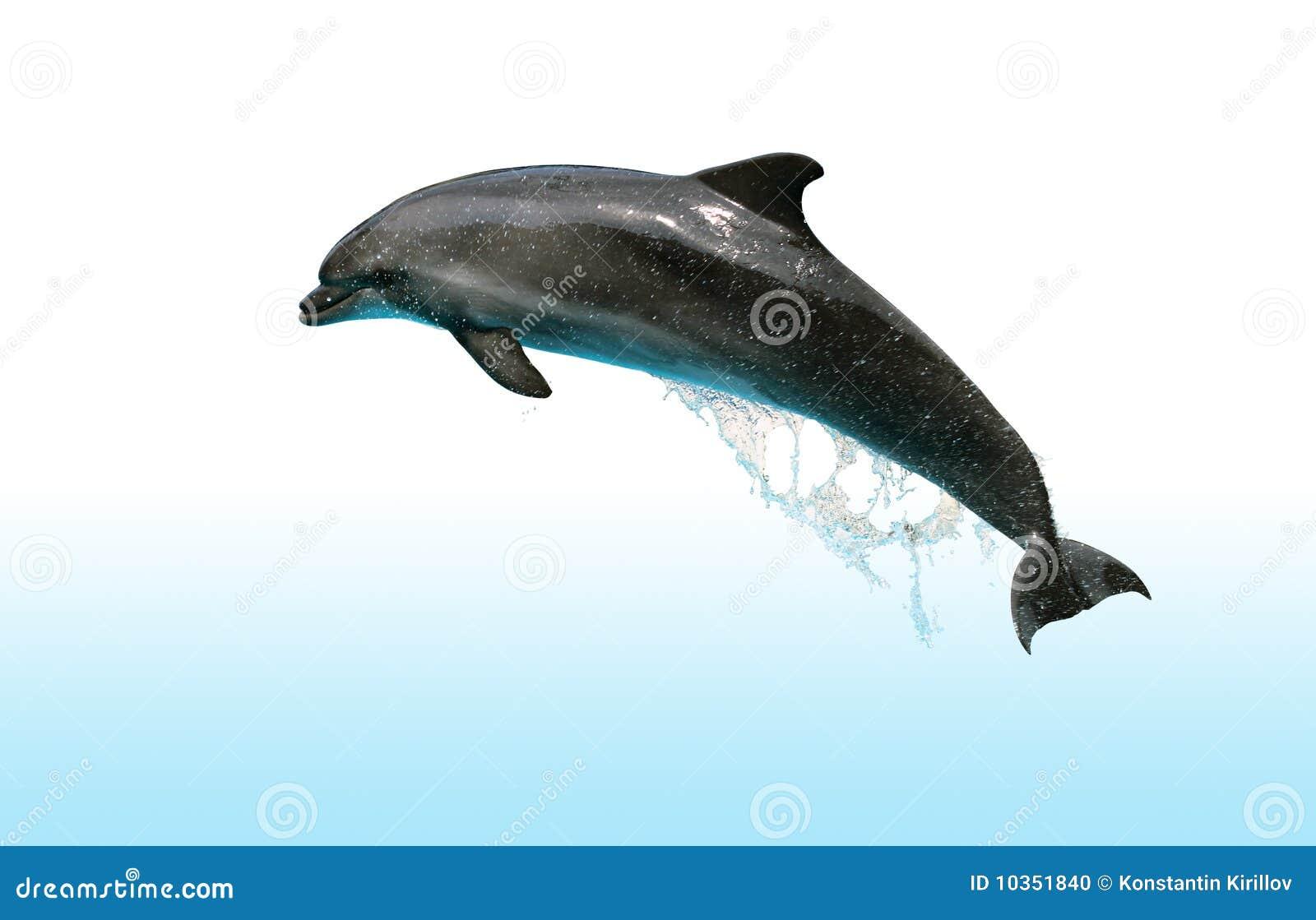 подскакивающий дельфин - Стоковое фото #1090914. подскакивающий дельфин - Стоковое изображение #1090914.