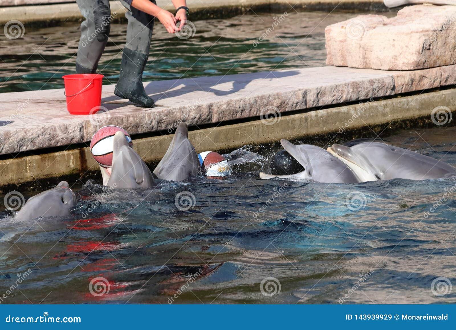 Delfin in zoo in germany in nuremberg.