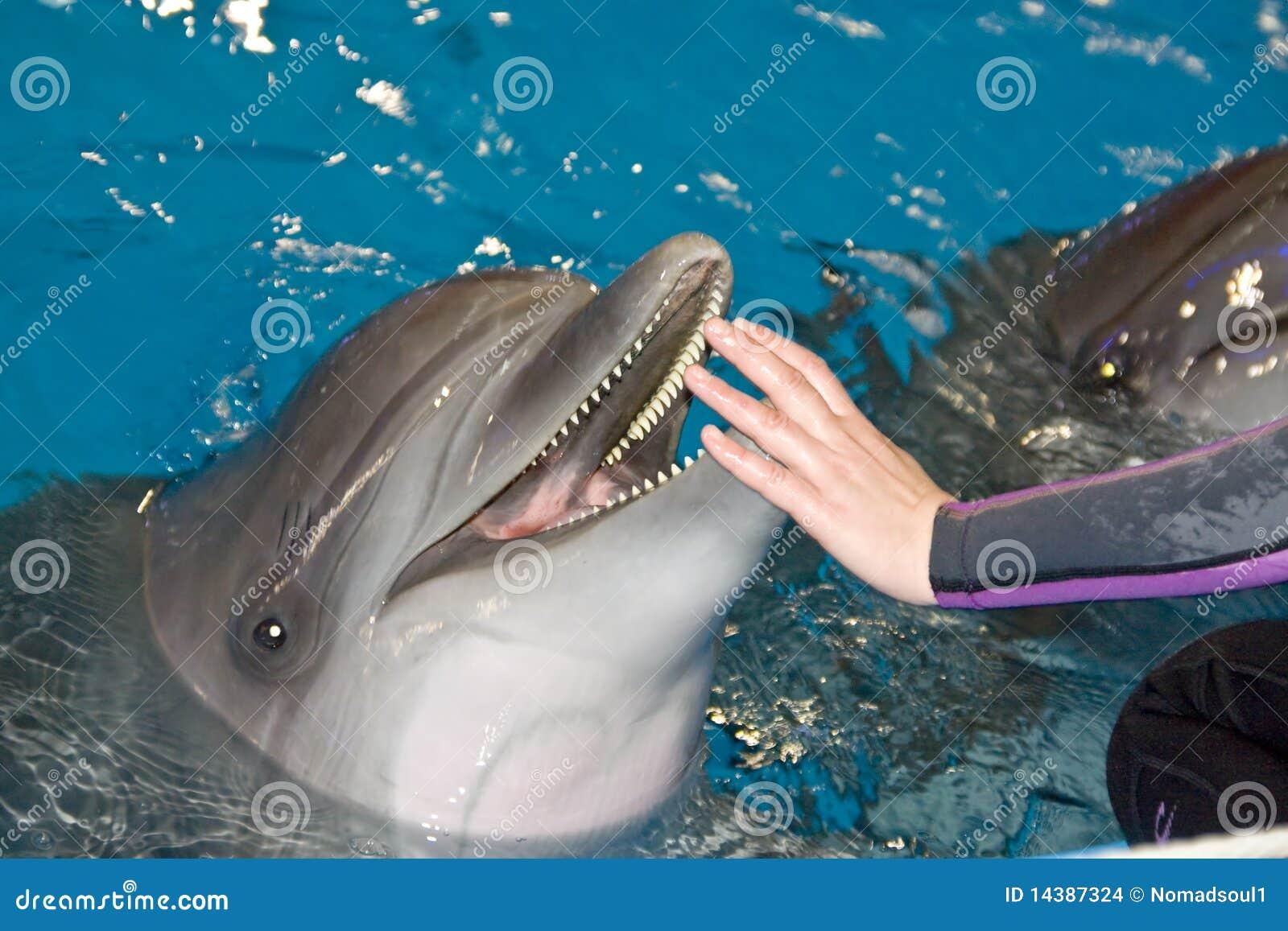 Delfinu ja target1237_0_