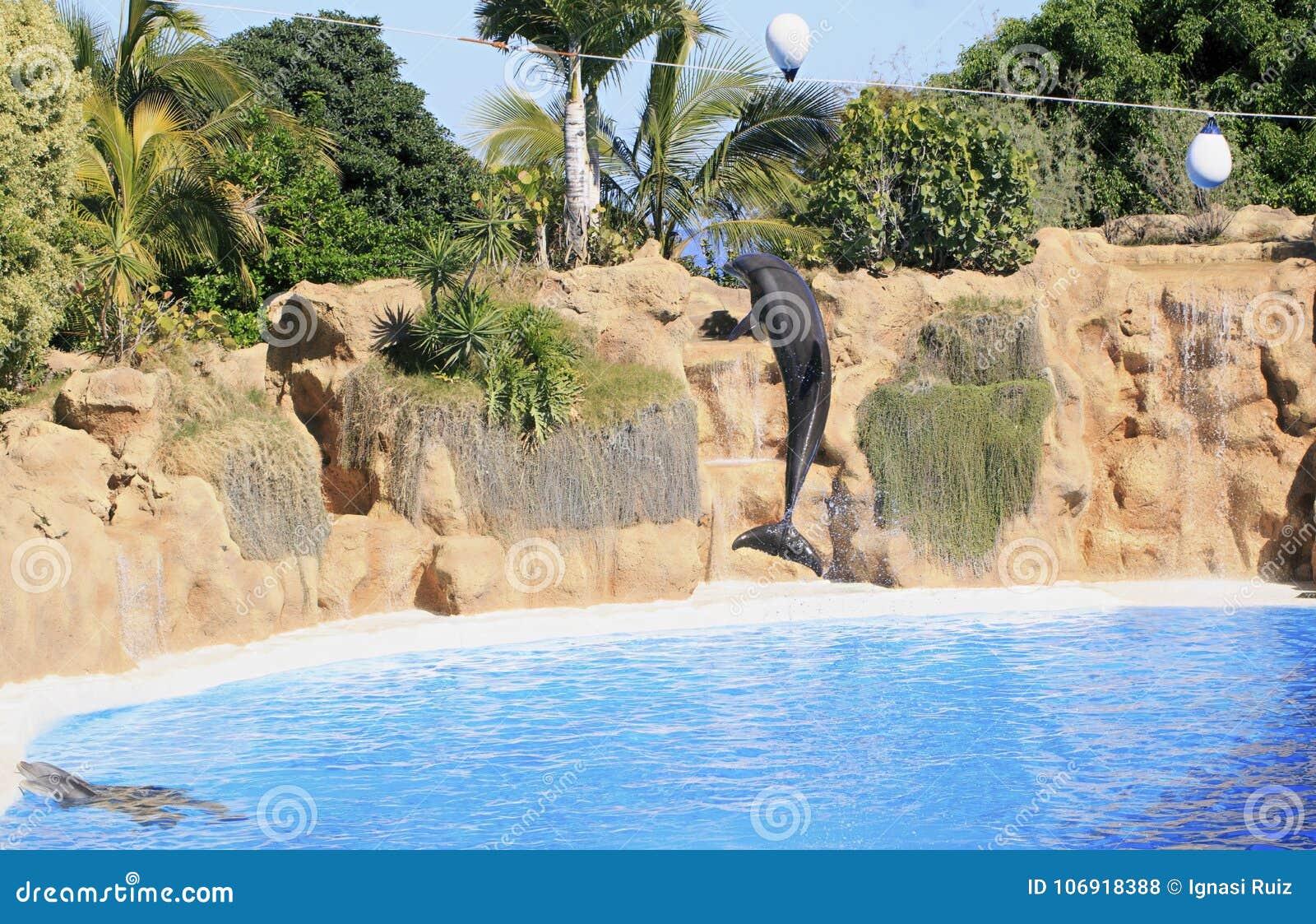 Delfinu utrzymanie w zoo