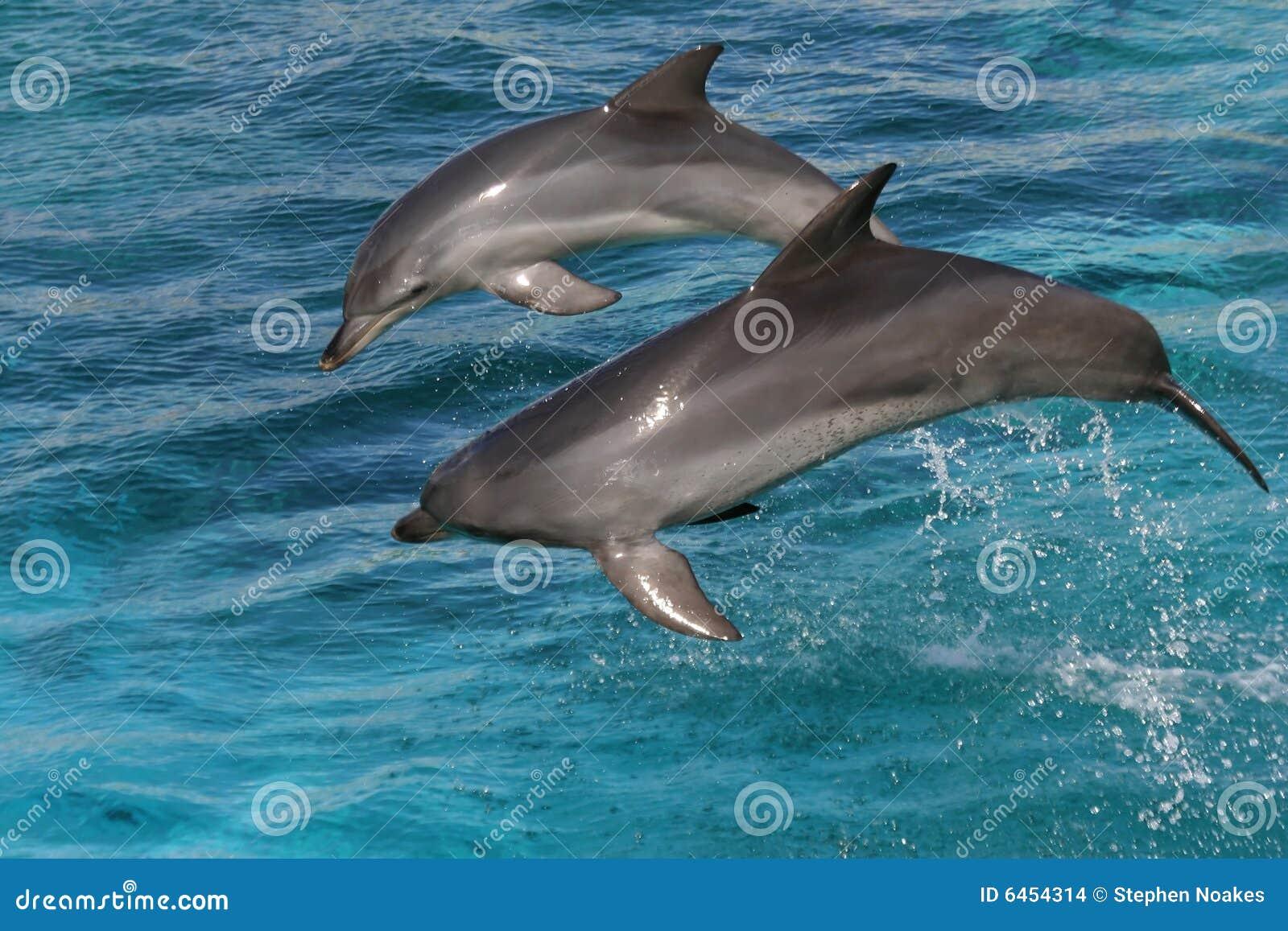 Delfiny butlonose jumping