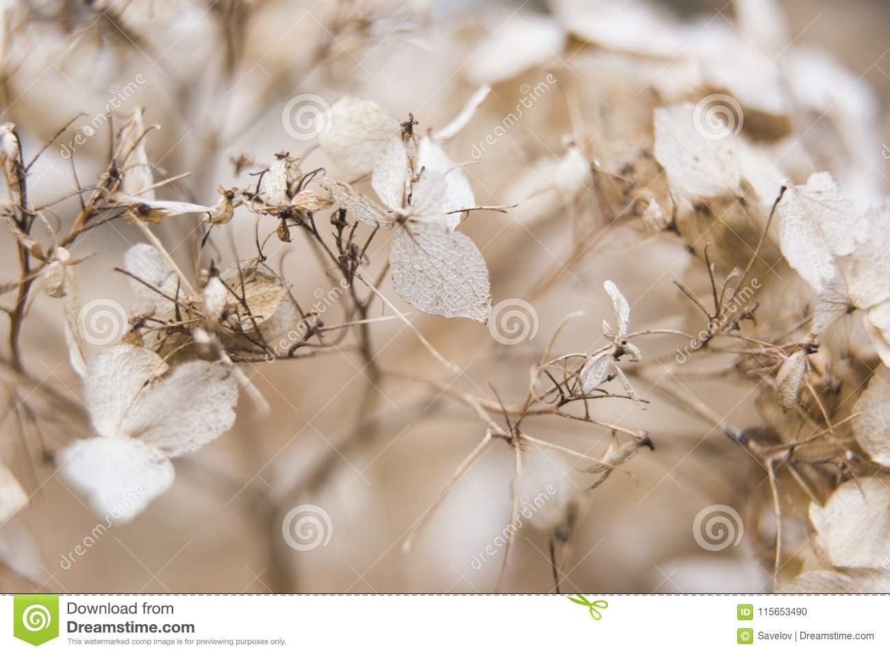 Delicate Background Of White Dried Flowers Is Macro Stock Photo