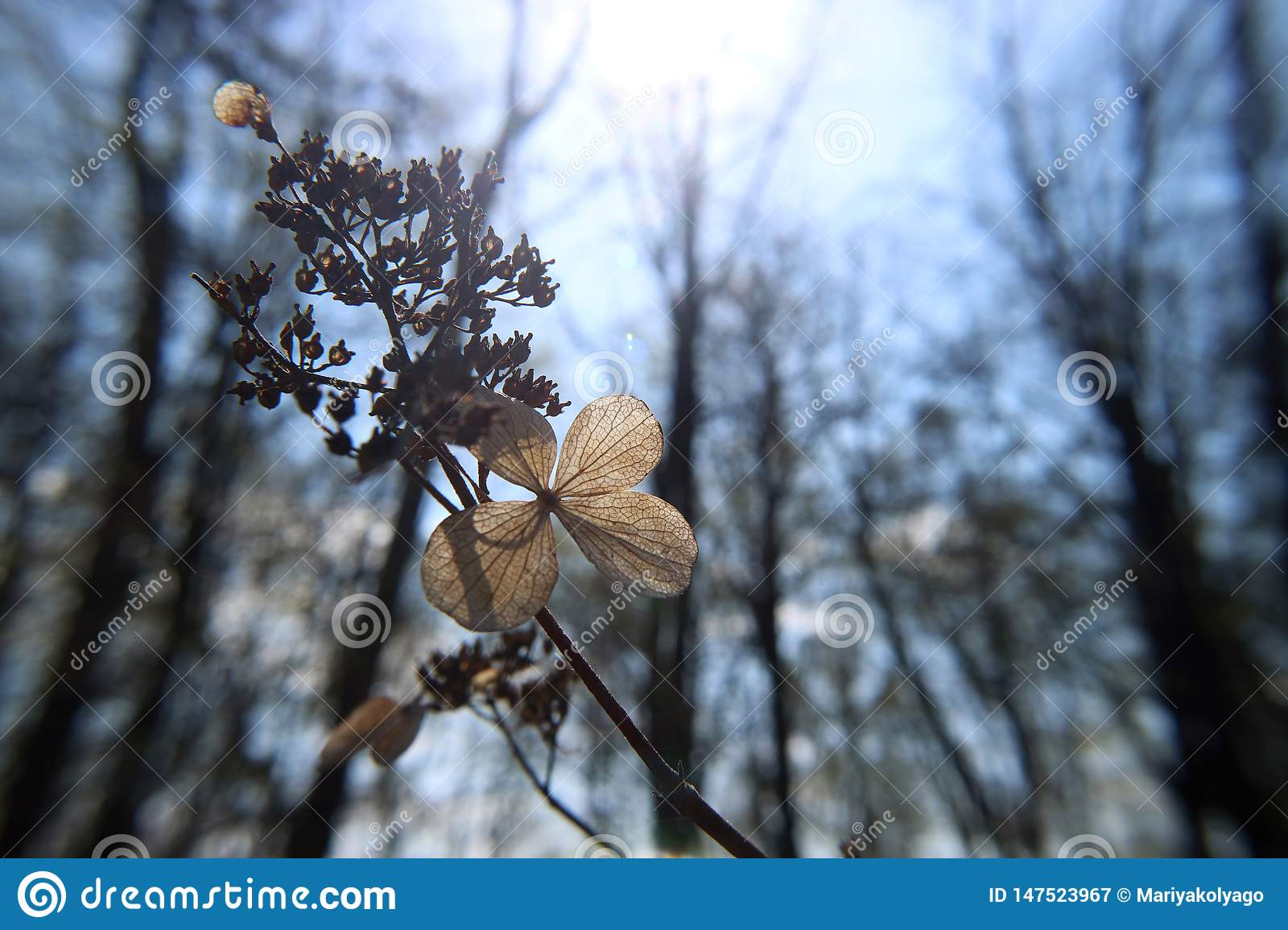 Delicate dry flower with leaves pattern natural on blue sky background macro photography
