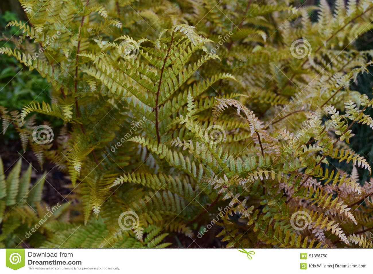 Delicate green ferns with dainty leaves