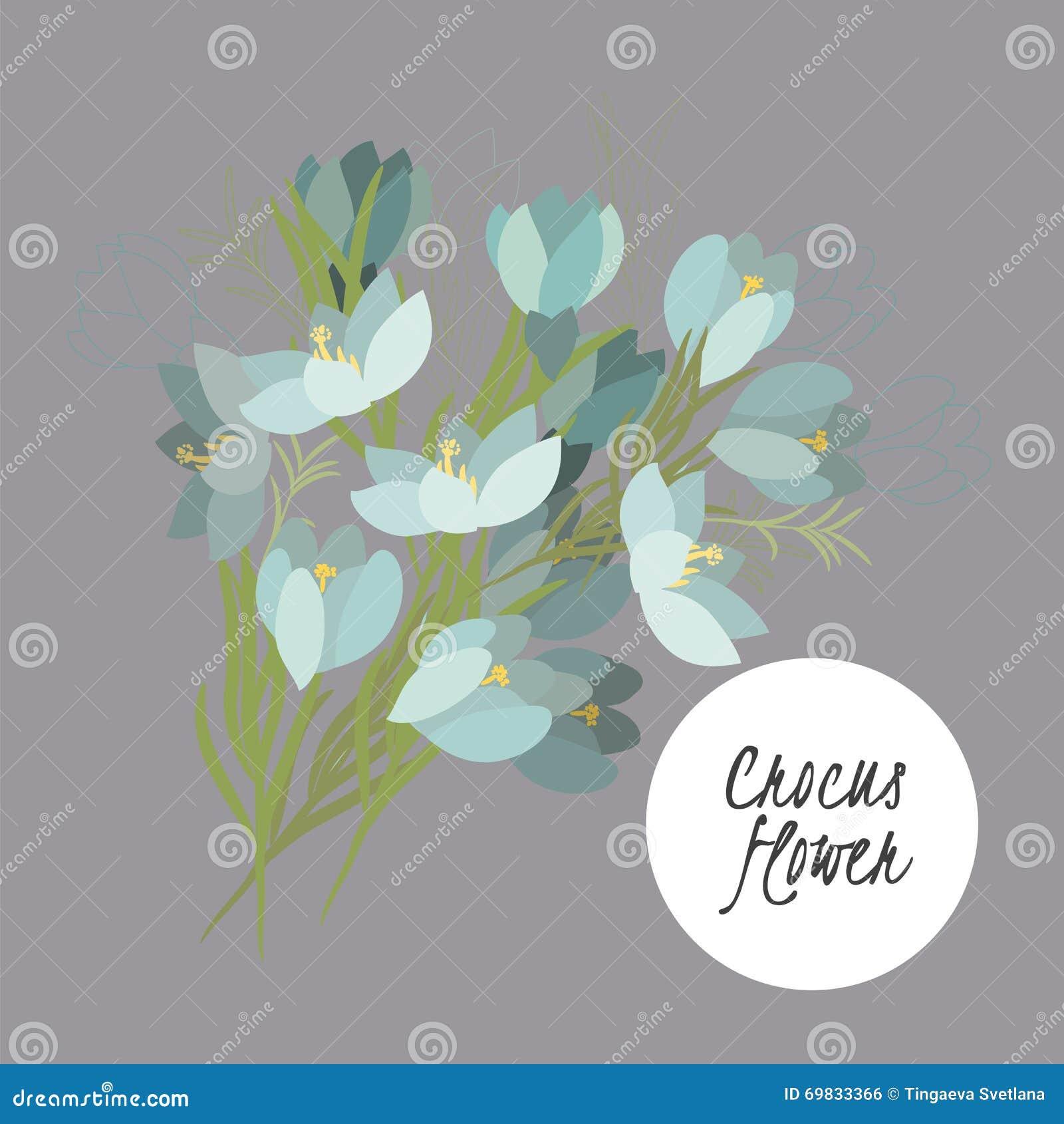 Delicate illustration crocus flower