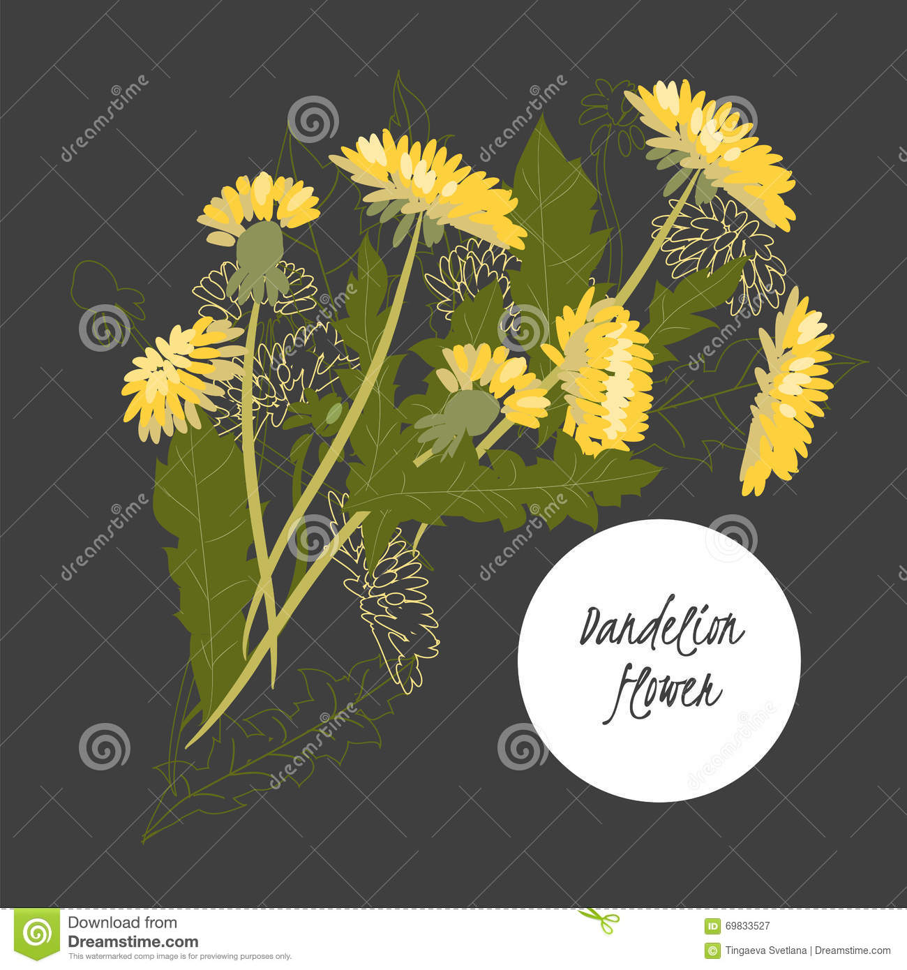 Delicate illustration Dandelion flower