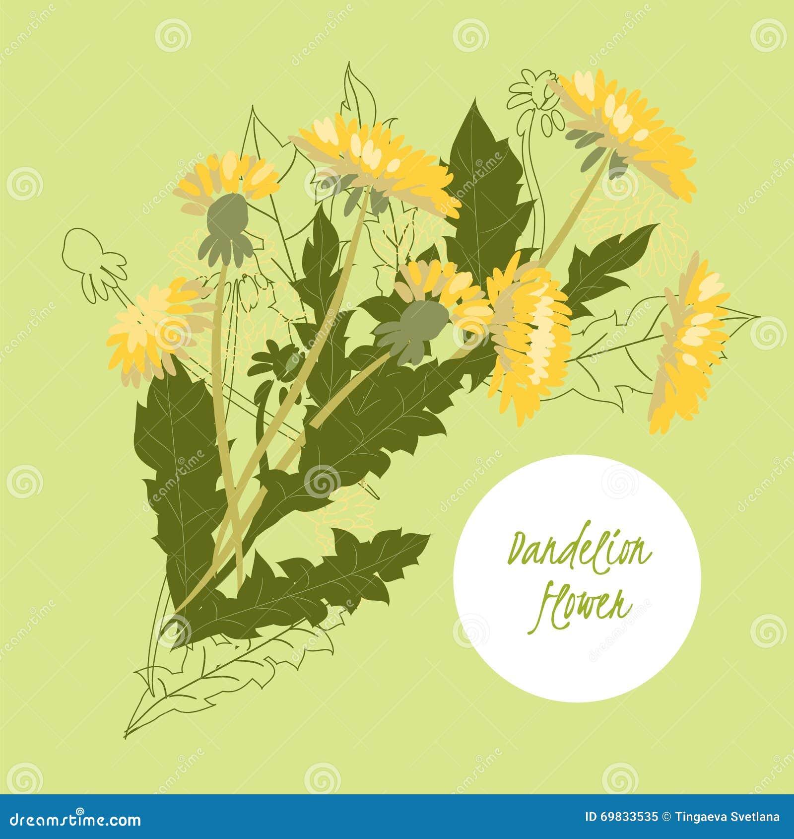 Delicate illustration Dandelion flower