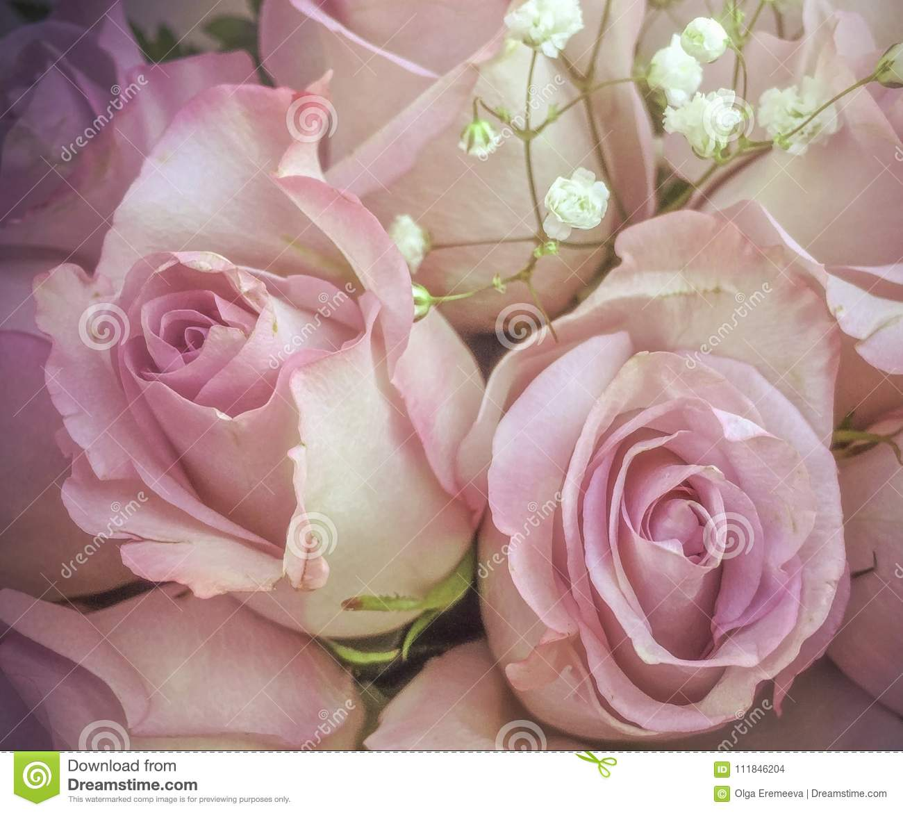 Delicate Pink Roses With Small White Flowers In Bouquet Stock Photo