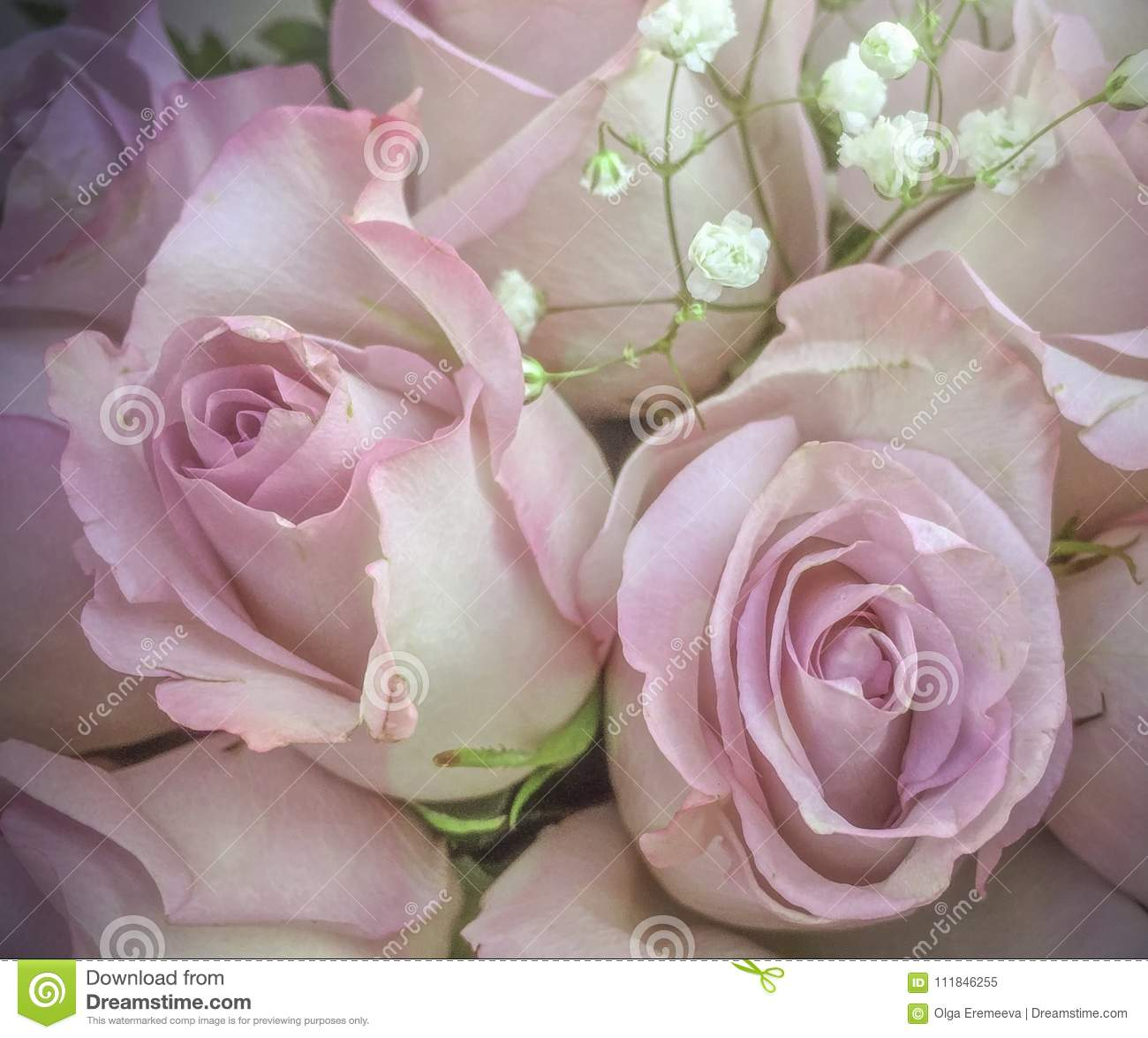 Delicate pink roses with small white flowers in bouquet stock image download delicate pink roses with small white flowers in bouquet stock image image of delicate izmirmasajfo