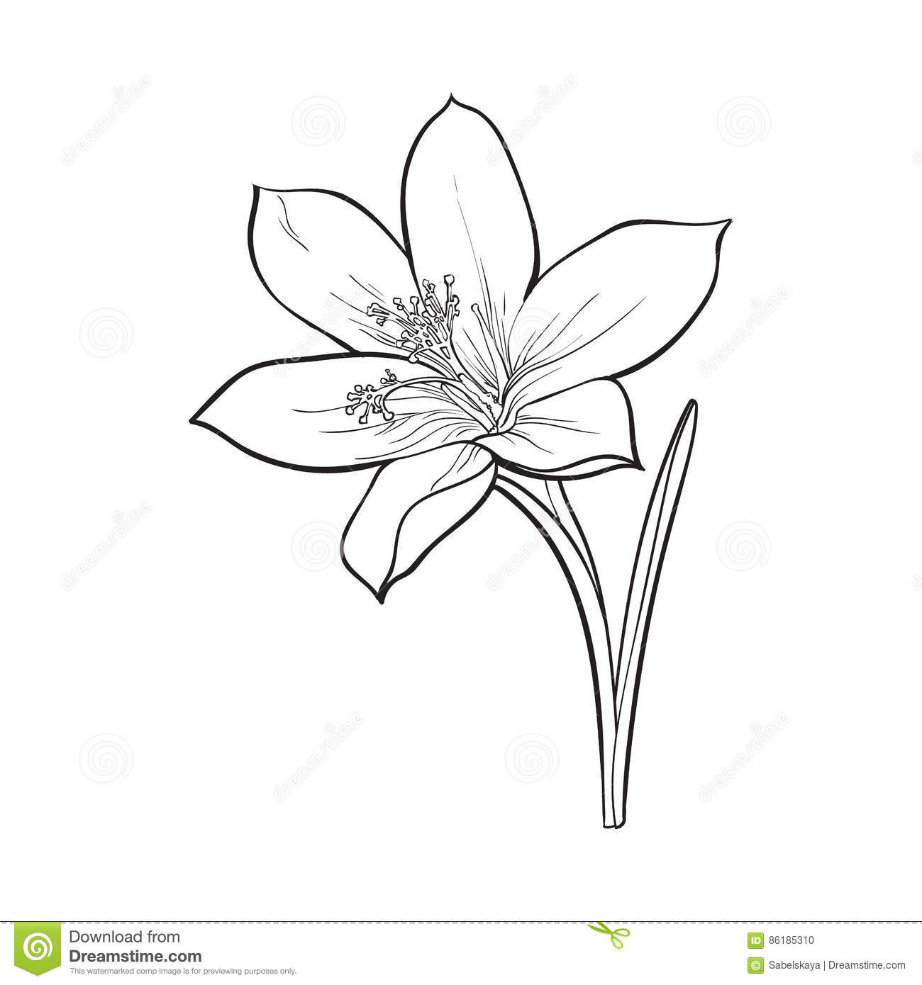 Flower Leaf Line Drawing : Delicate single crocus spring flower with stem and leaf