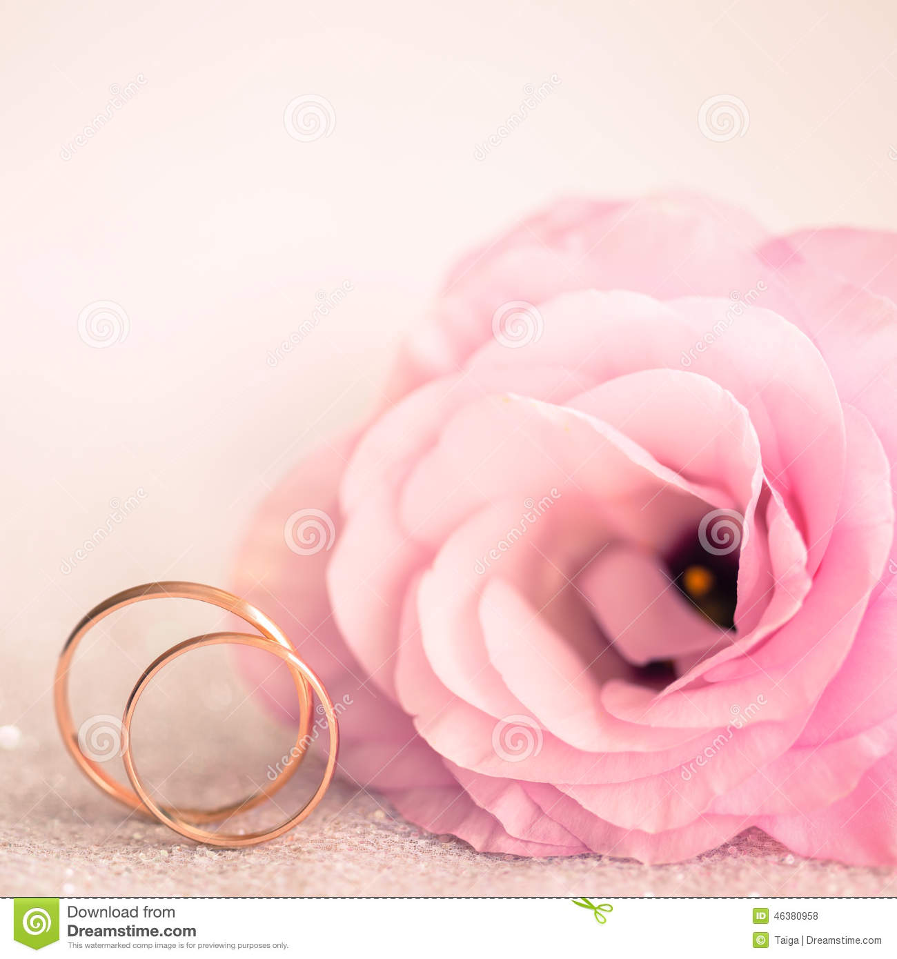 Delicate Wedding Background With Rings And Pink Flower Stock Photo ...