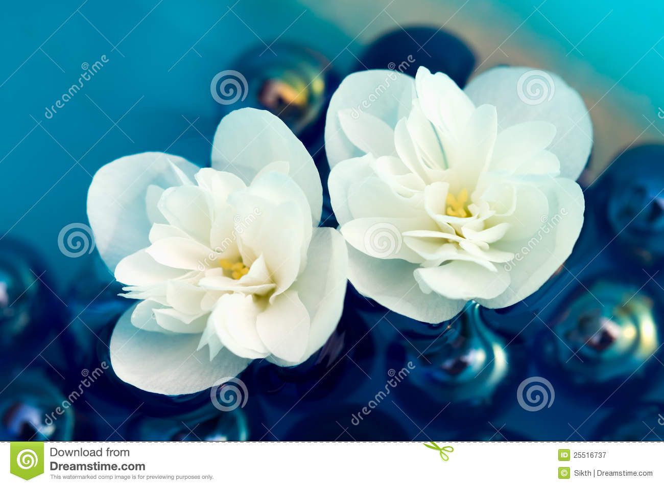 delicate white jasmine flowers on water royalty free stock. Black Bedroom Furniture Sets. Home Design Ideas