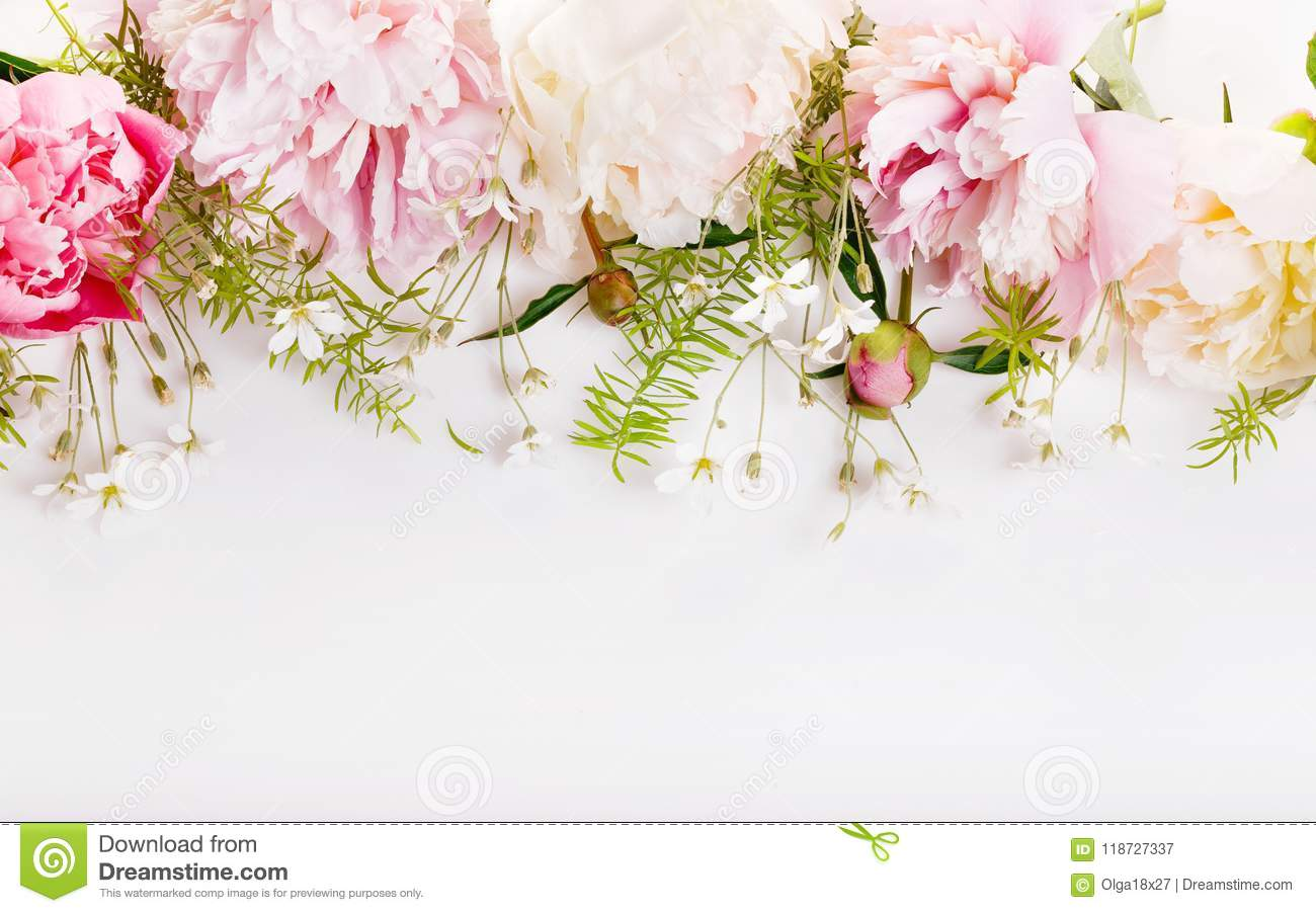 Delicate White Pink Peony With Petals Flowers And White Ribbon On