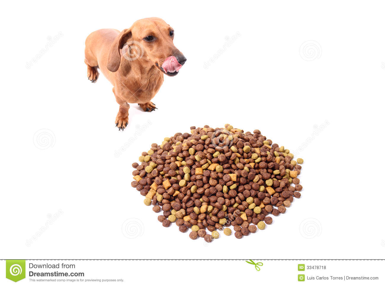 Delicious Doog Food Stock Photo Image Of Dachshund Small