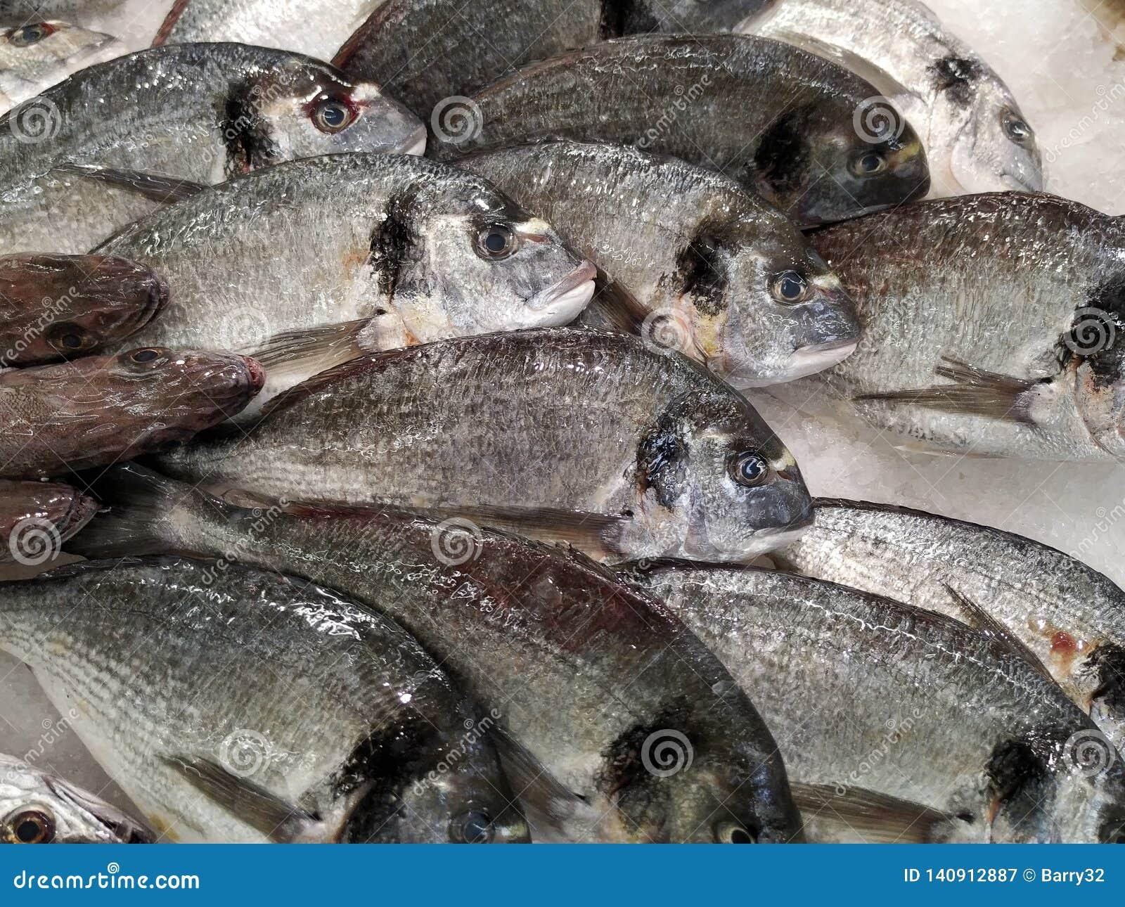 Delicious Fresh Sea Bream Fish On Ice In Fish Market In