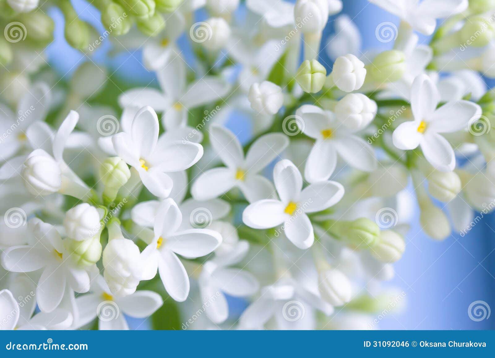 Delikat vit lila