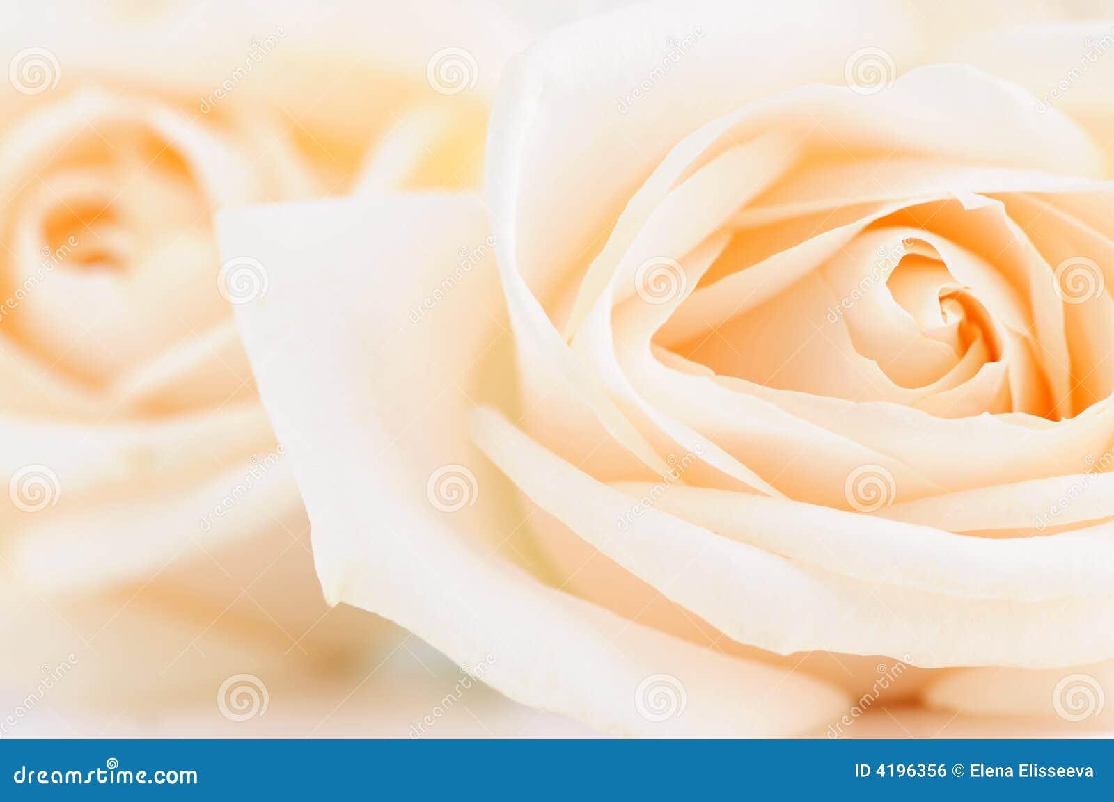 Delikatne beżowe róże